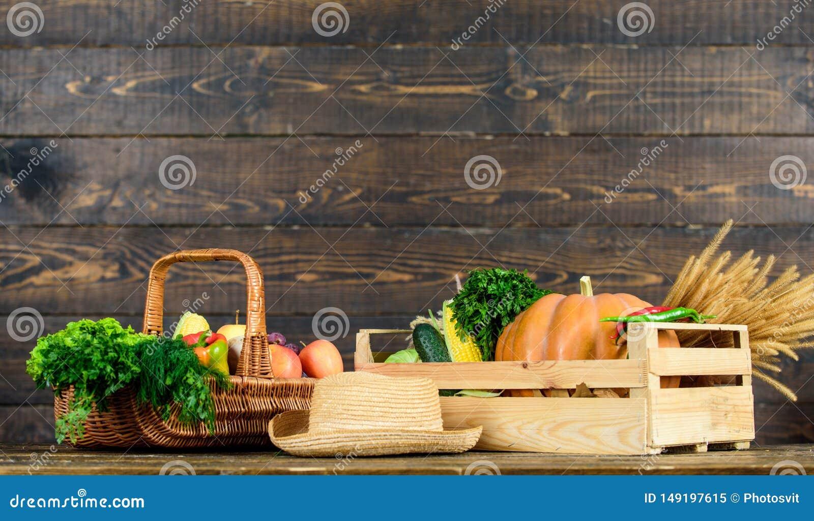 Vegetais das colheitas da colheita do outono Alimento natural cultivado localmente Mercado dos fazendeiros Vegetais vibrantes e c