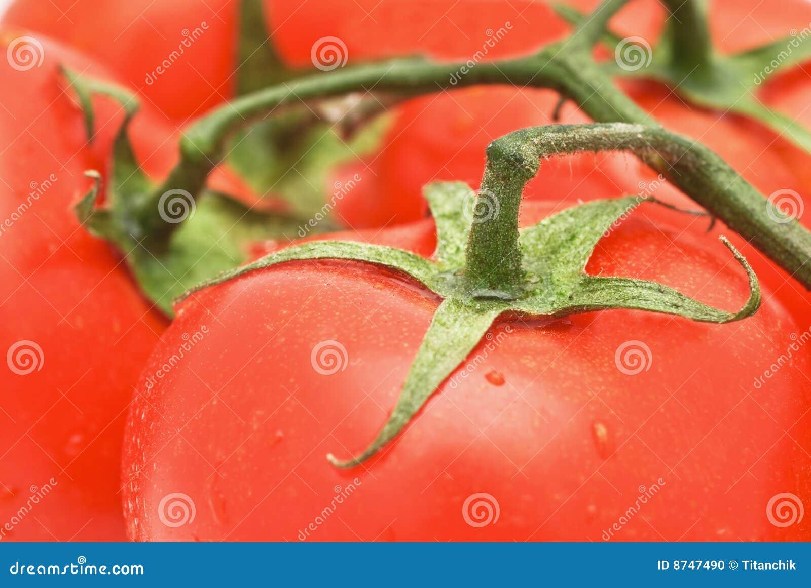 Vegetarian Meals- tomato