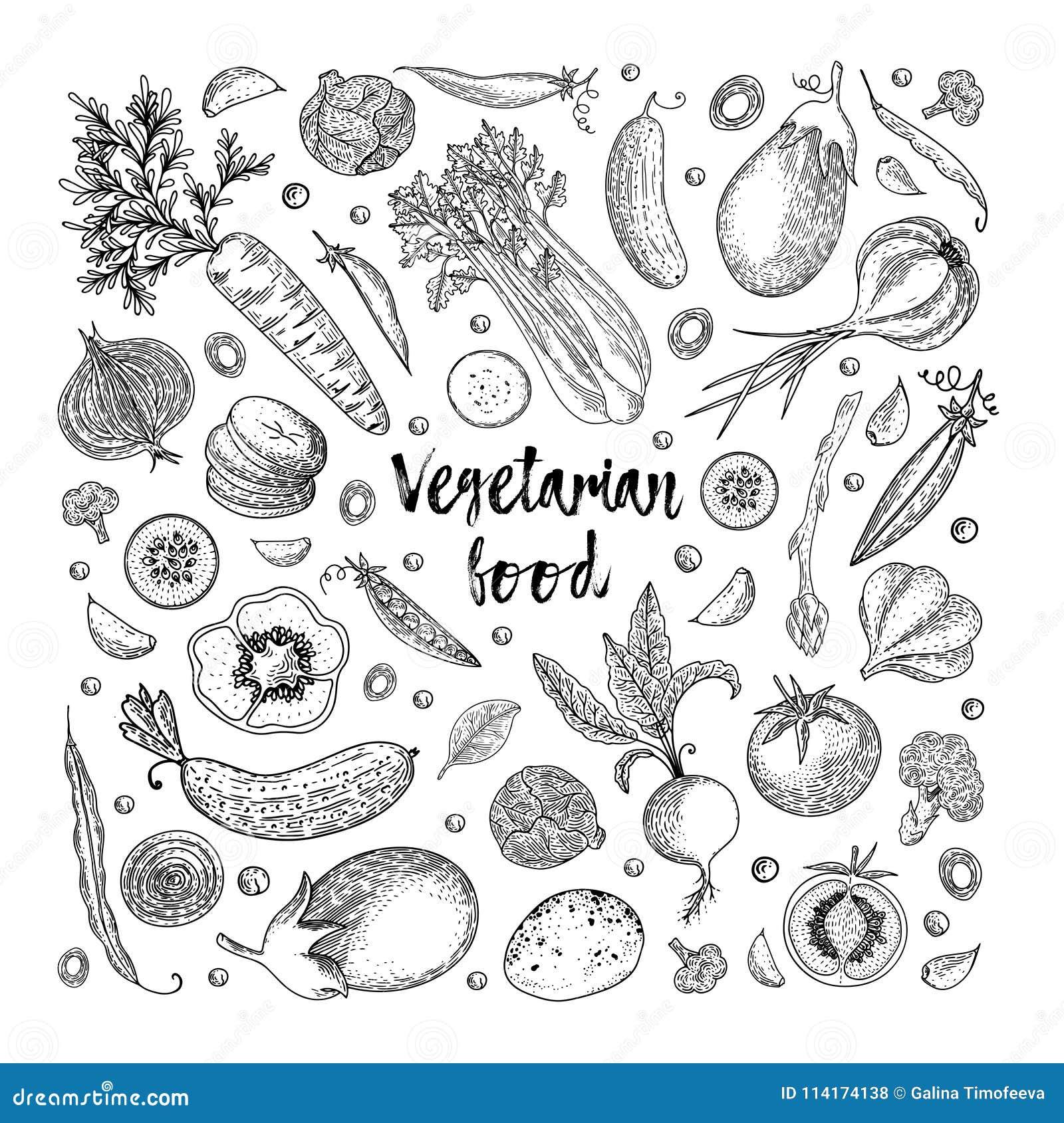 Vegetarisch voedsel Plantaardige hand getrokken uitstekende vectorillustratie De affiche van de landbouwbedrijfmarkt Het gezonde