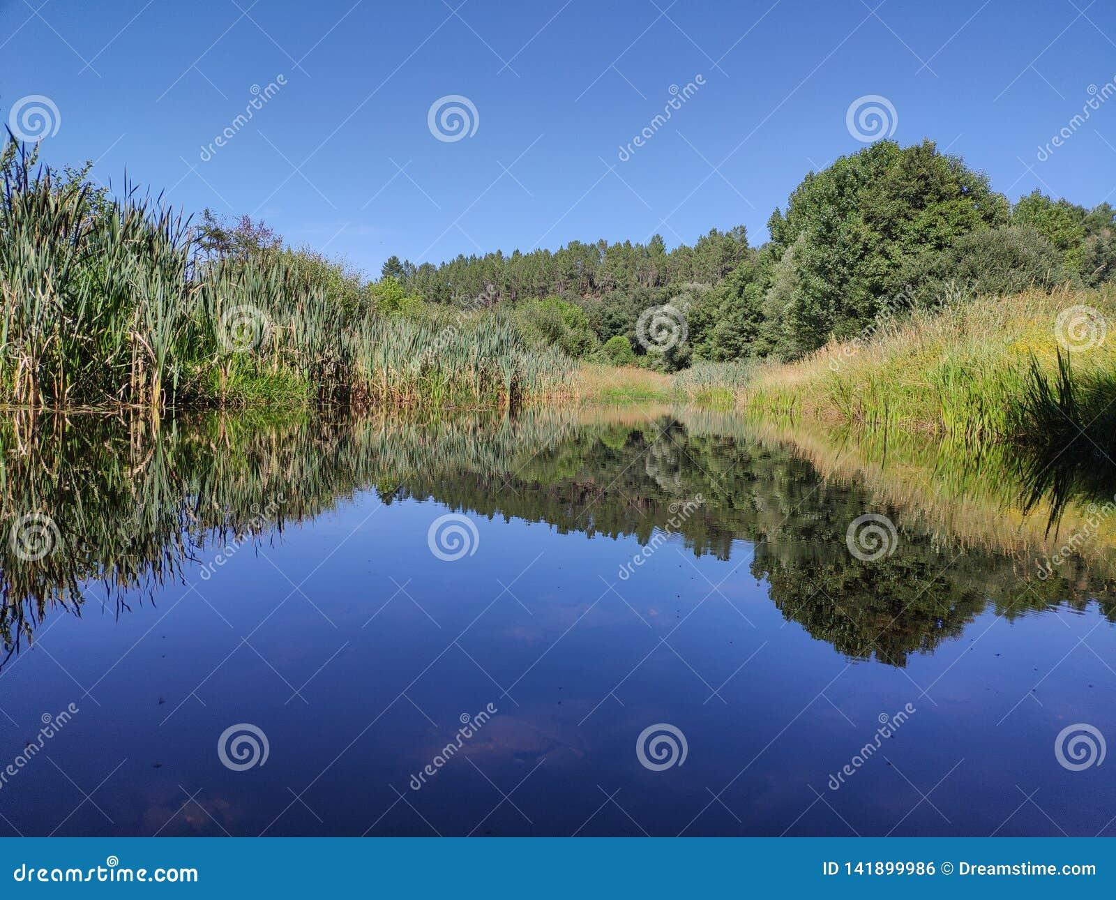 Vegetatie op de rand van een rivier in zijn water wordt weerspiegeld dat