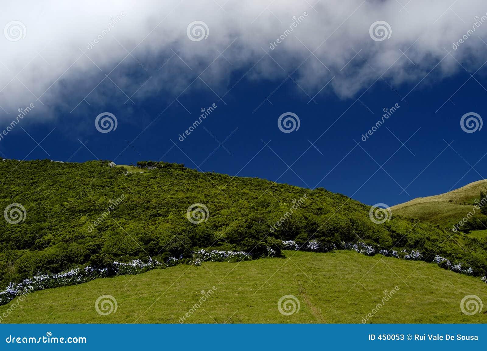 Download Vegetation stock image. Image of color, shadows, leaves - 450053