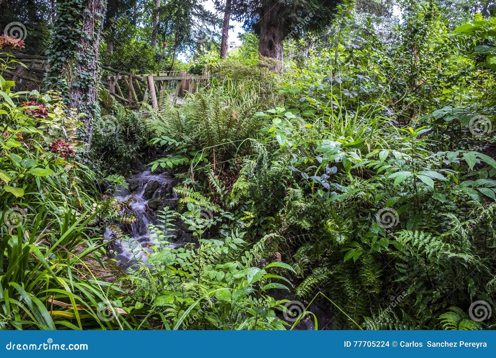 Vegetation Im Allgemeinen Park Jardin- Des Plantesgartens In ...