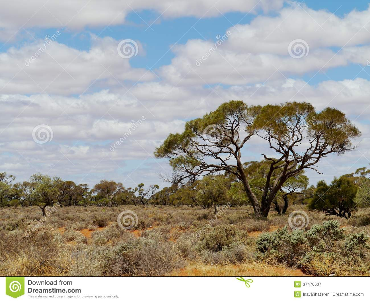 Vegetation in the outback of australia royalty free stock for Landscapers adelaide south