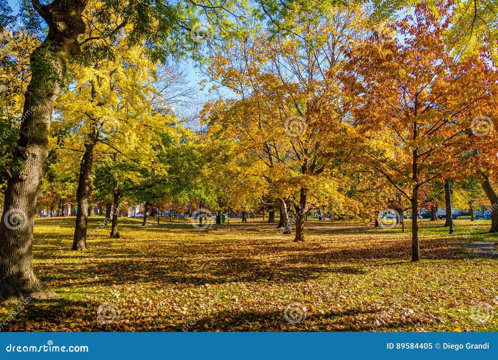 Vegetazione variopinta di autunno del parco del Queens - Toronto, Ontario, Canada