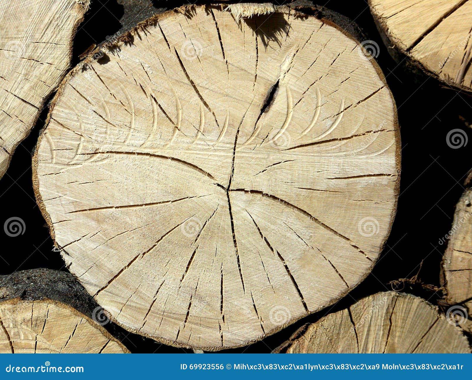 Veines en bois de tronc photo stock image 69923556 - Tronc de bois ...