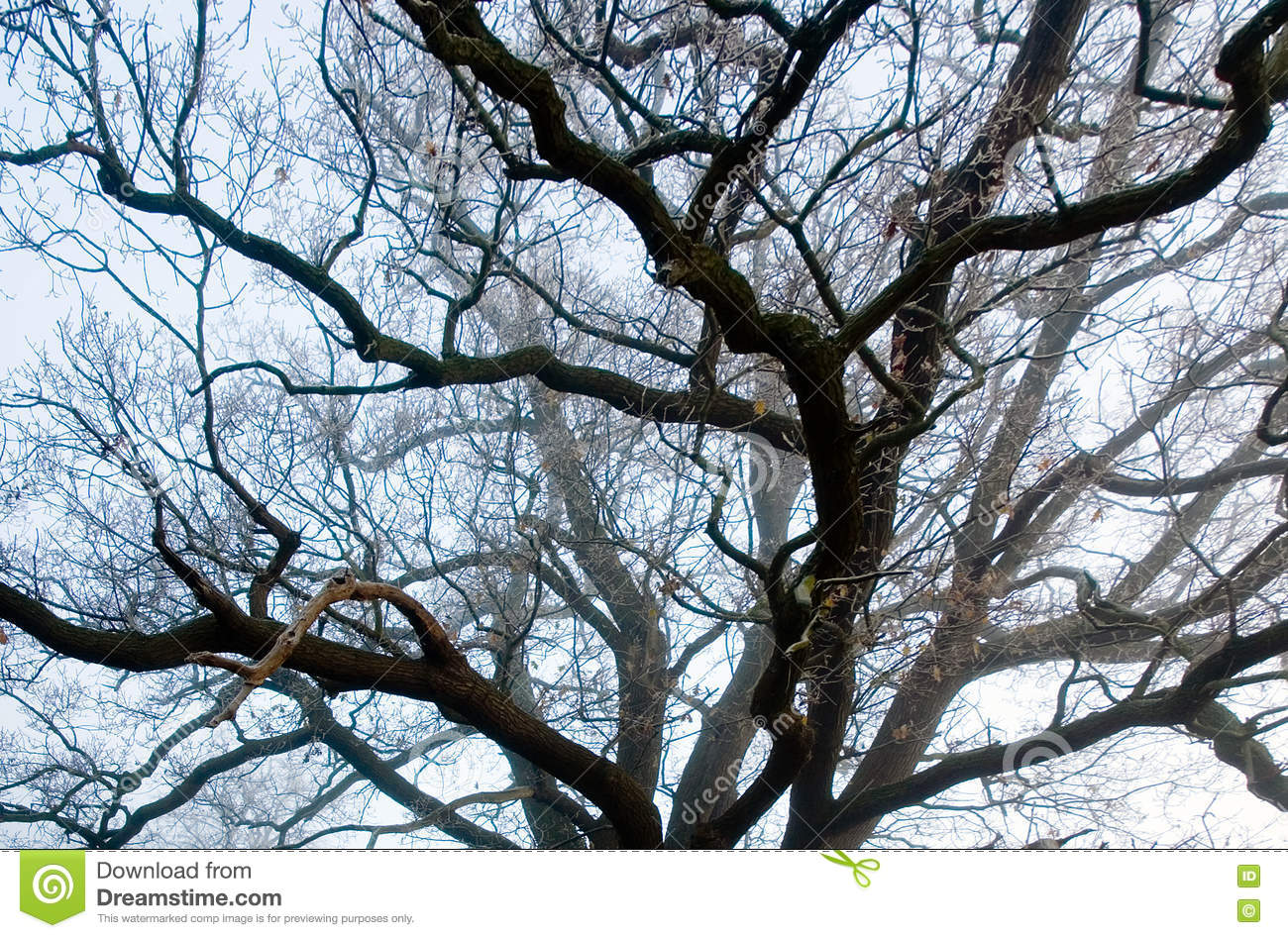 The Veins of Tree Branches