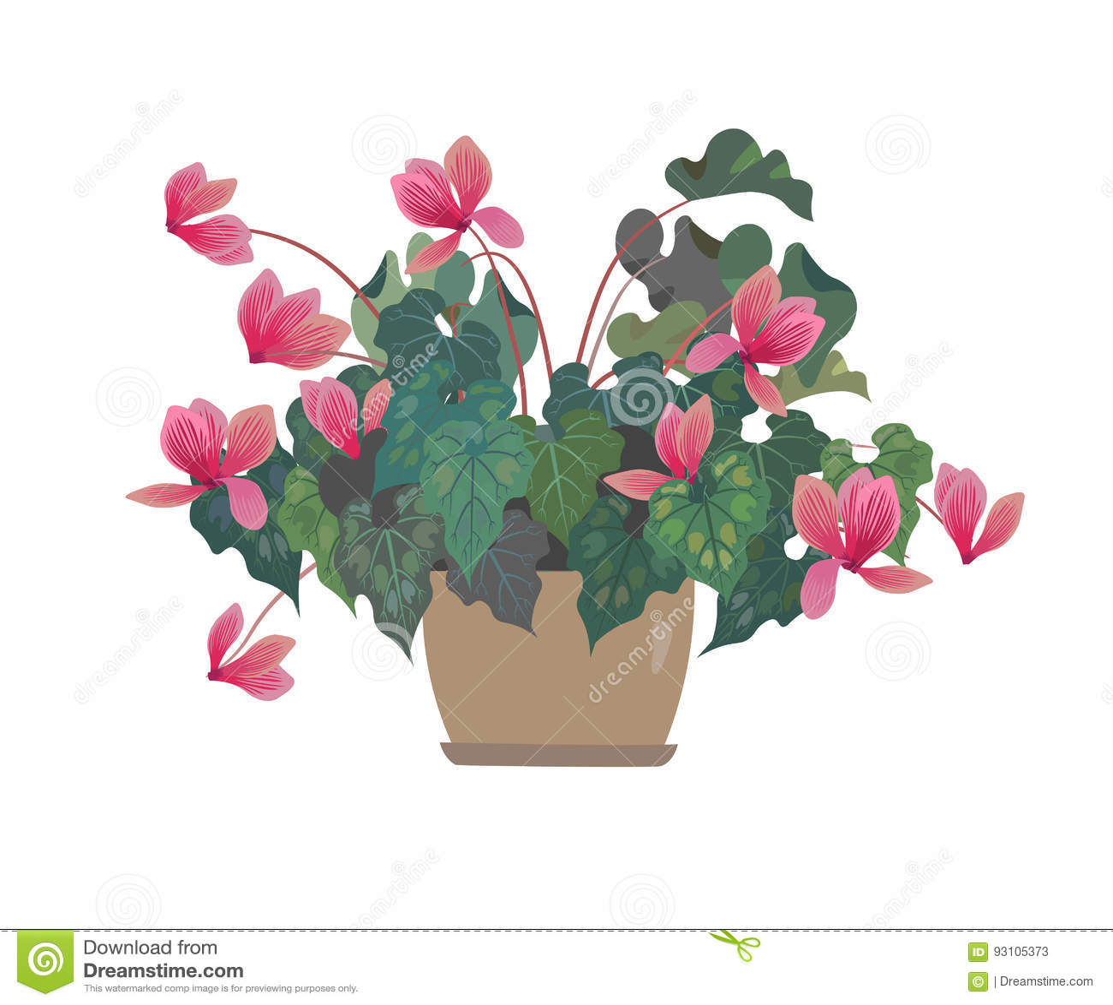 Vektor för blommaillustrationkruka cyclamen pinken backfround blommar home isolerat över white