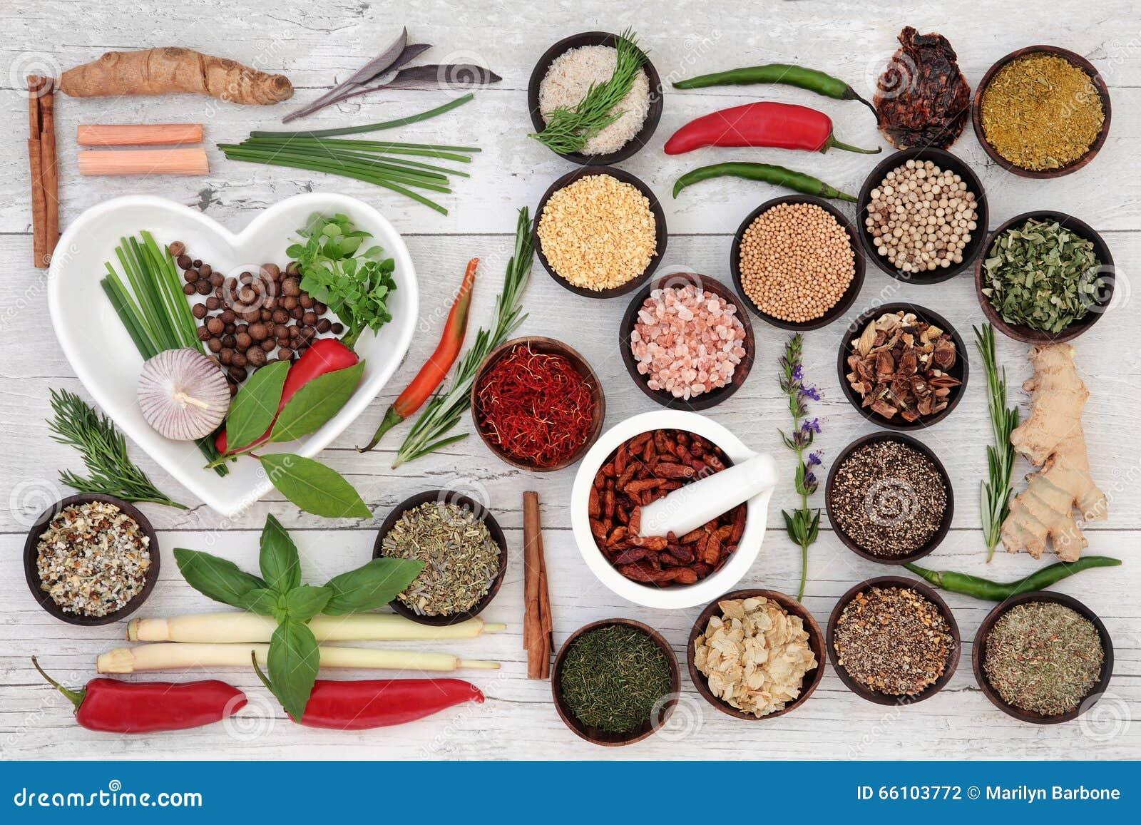 Vektor för krydda för samlingsörtillustration