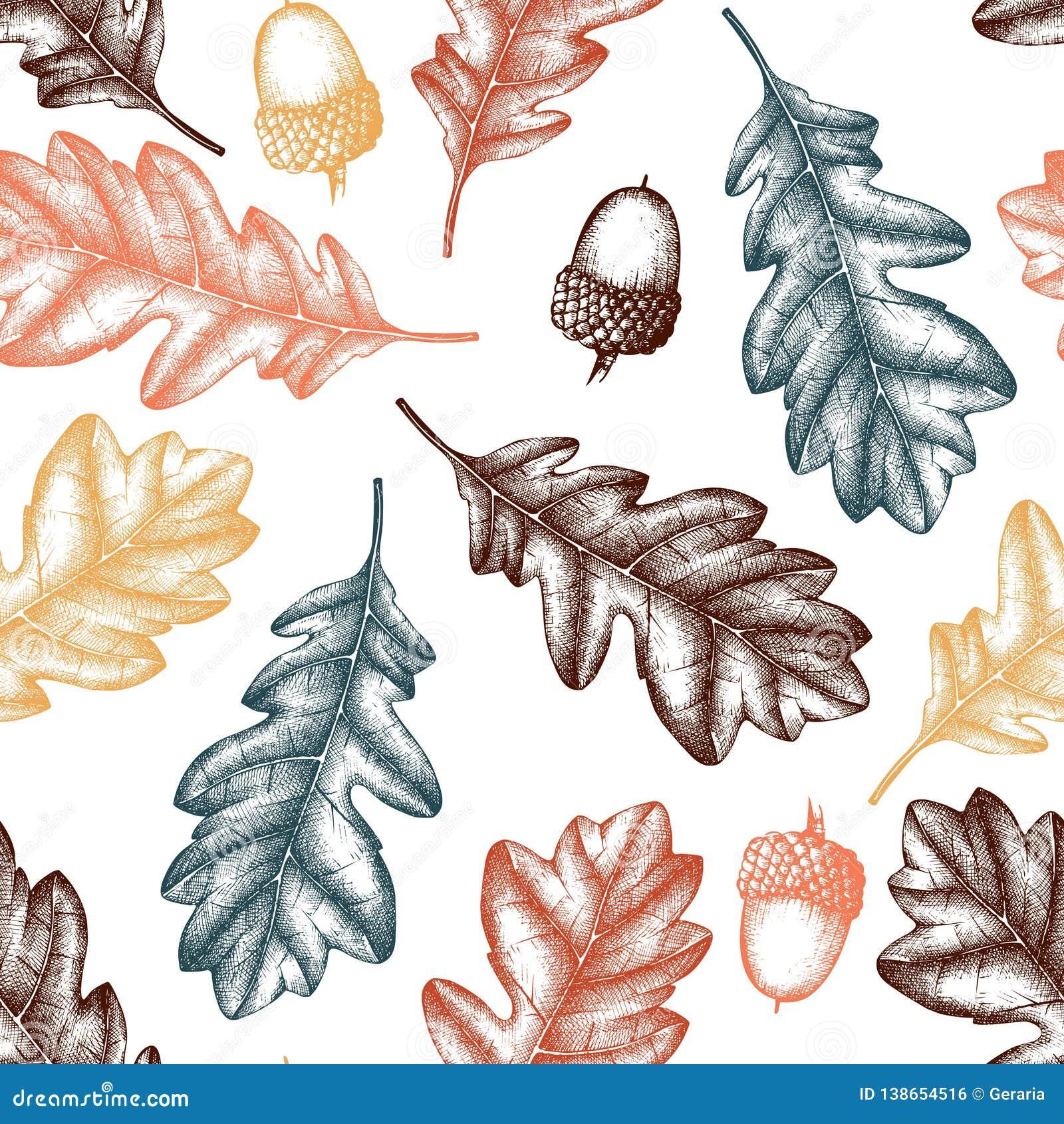Vektorbakgrund med ekfrö och sidor för hand utdraget Tappninghöstdesign Botanisk trädgårdbeståndsdelar Sömlöst ekollonPA