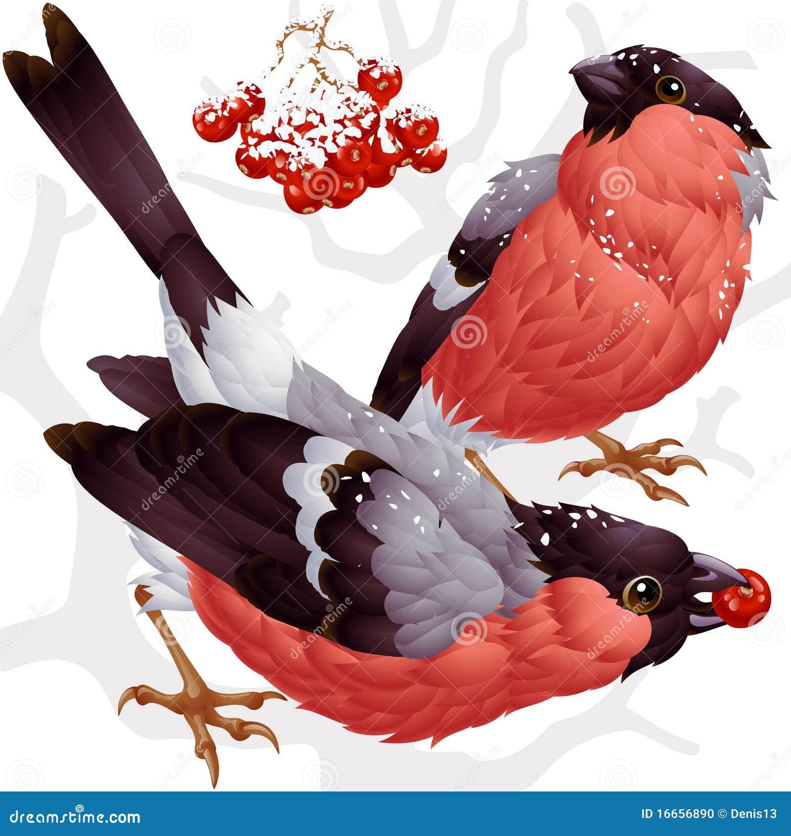 Vektorbullfinch und ashberry