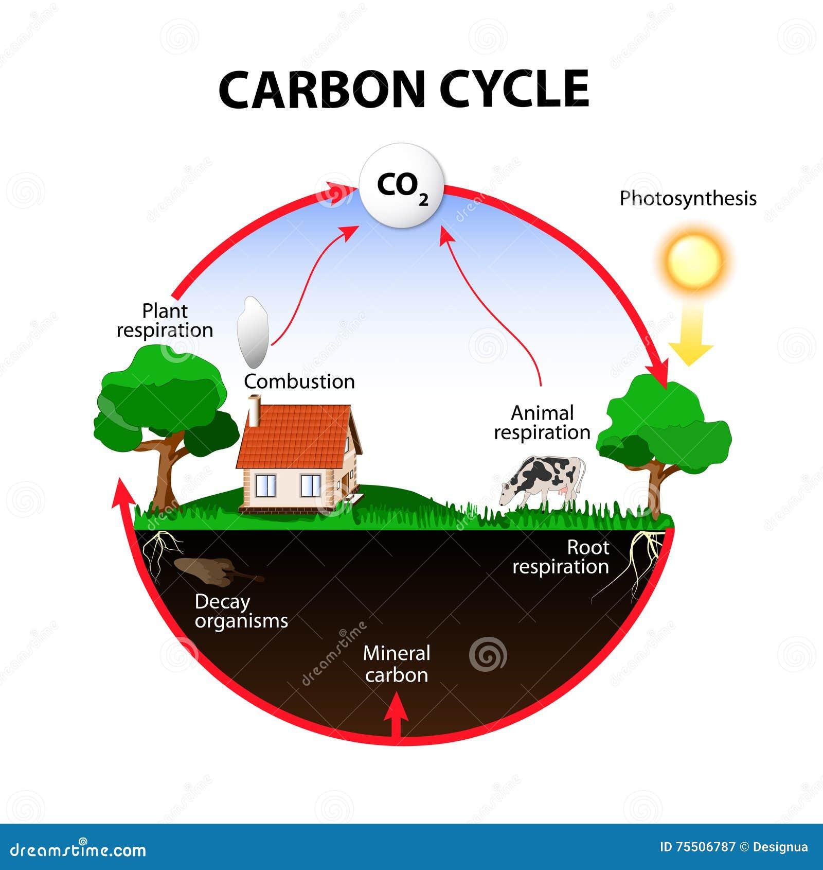 Vektordiagramm zeigt die Bewegung des Kohlenstoffs zwischen Land, Atmosphäre und Ozeanen