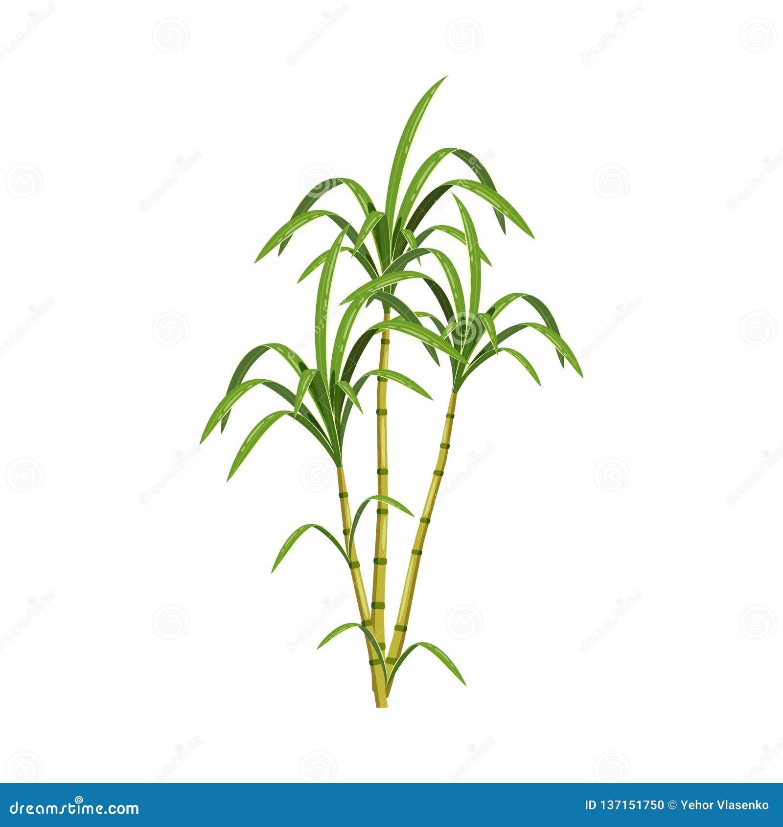 Vektorentwurf des Zuckerrohr- und Stockzeichens Sammlung der Zuckerrohr- und Feldvorratvektorillustration