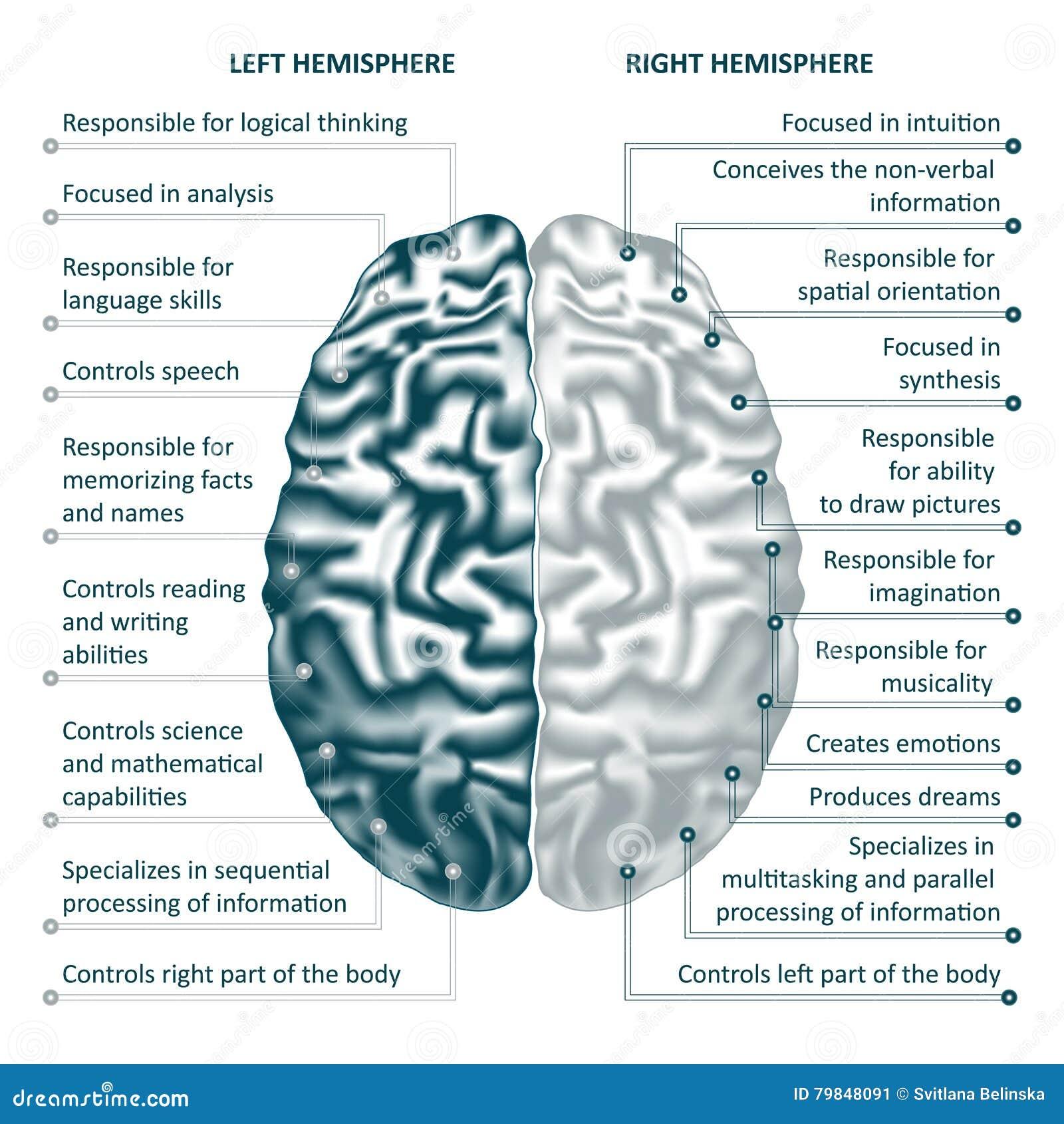 Vektorillustration Infographics Gelassene Und Rechte Hemisphären Des ...
