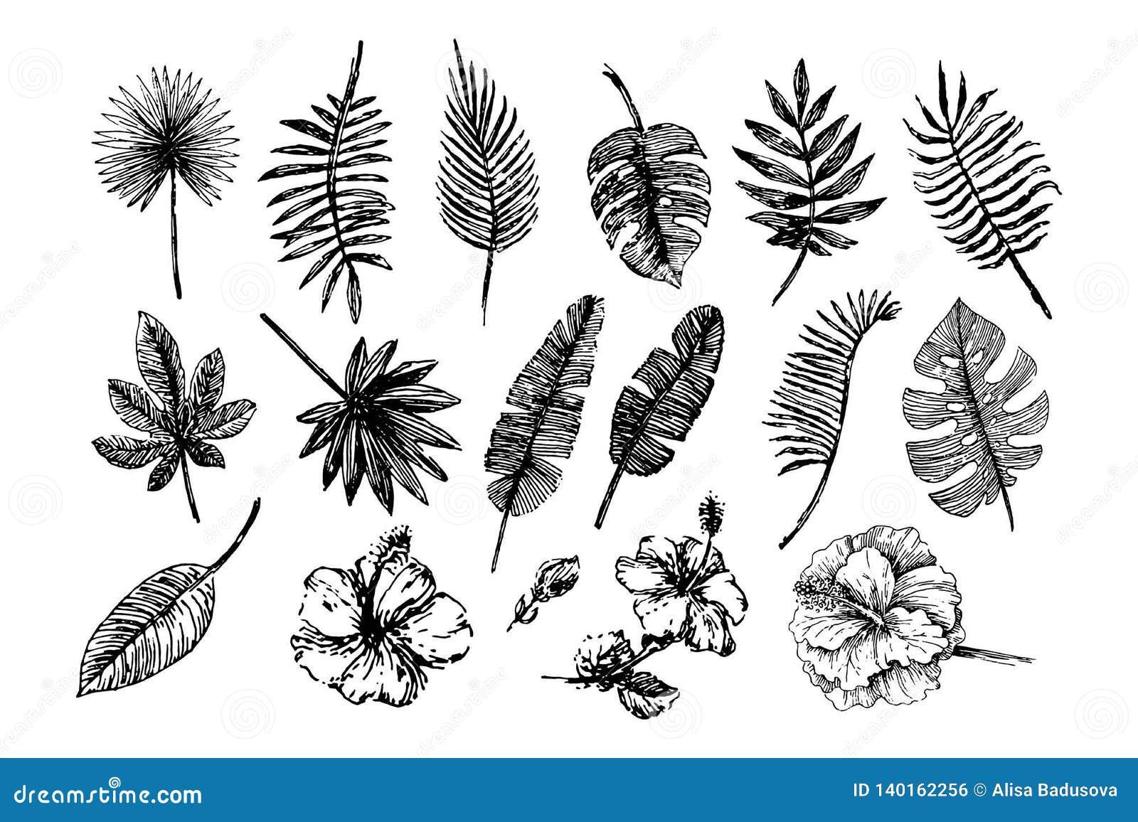 Vektorillustrationbegrepp av tropiska sidor och blommor - uppsättning av isolerade vektorsymboler