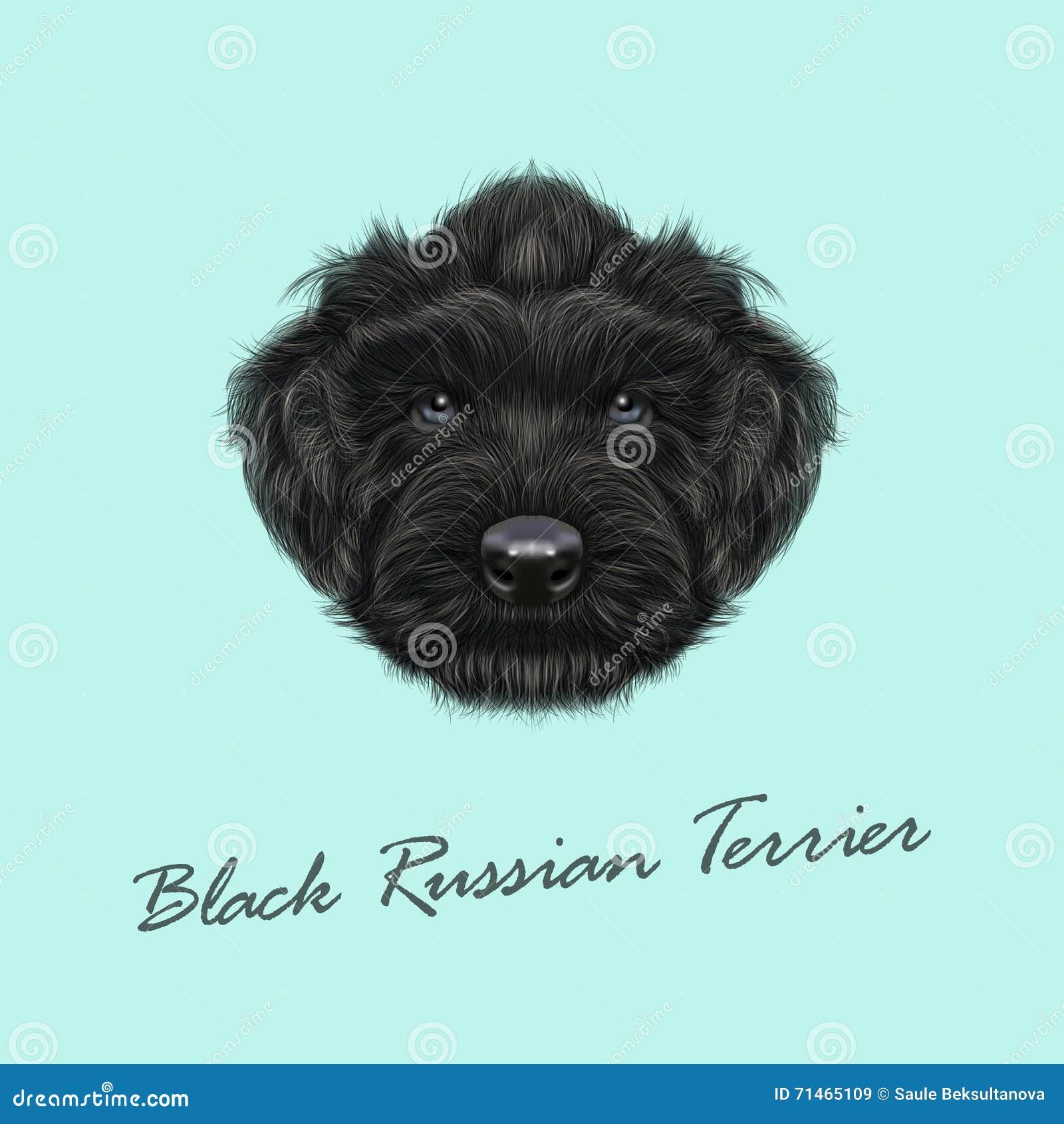 Vektorn illustrerade ståenden av den svarta ryssTerrier hunden