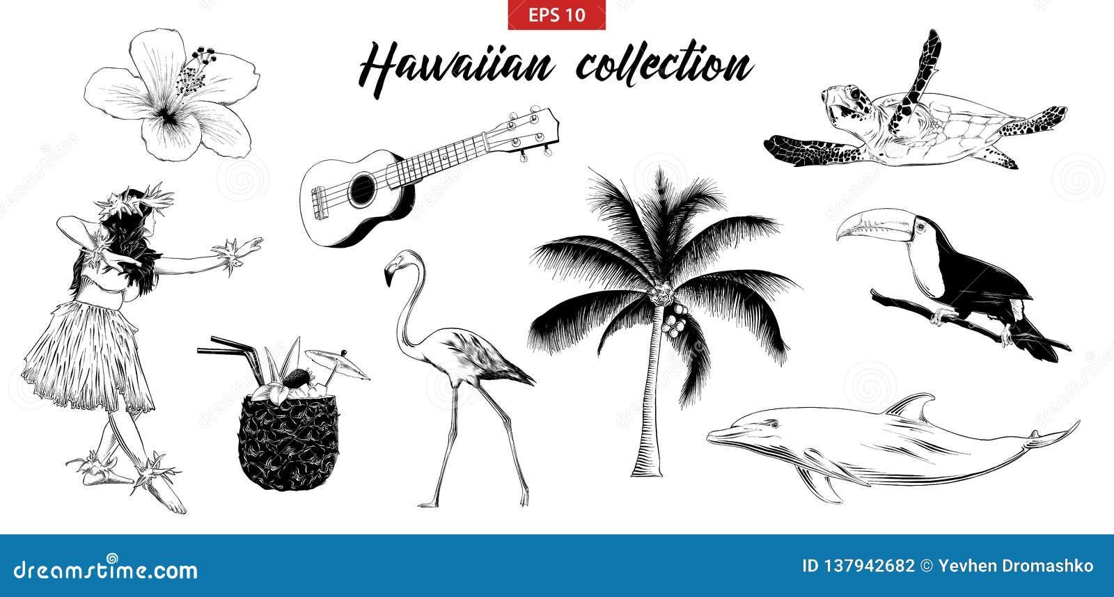 Vektorn inristade stilillustrationen för logo, emblem, etikett eller affisch Den drog handen skissar ställde in av hawaiansk flic