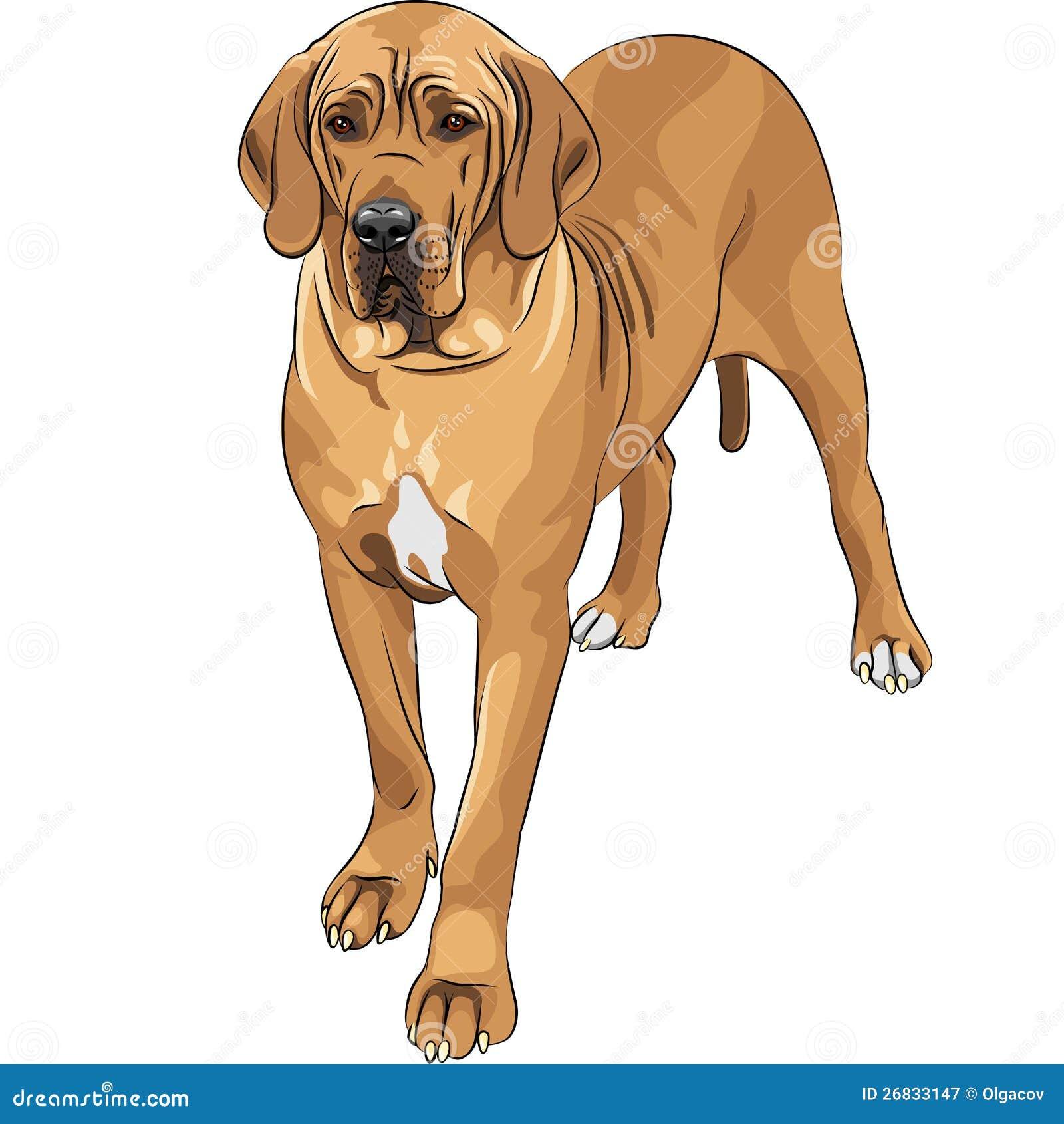 Vektorn skissar den inhemska hunden lismar den stora danskaveln