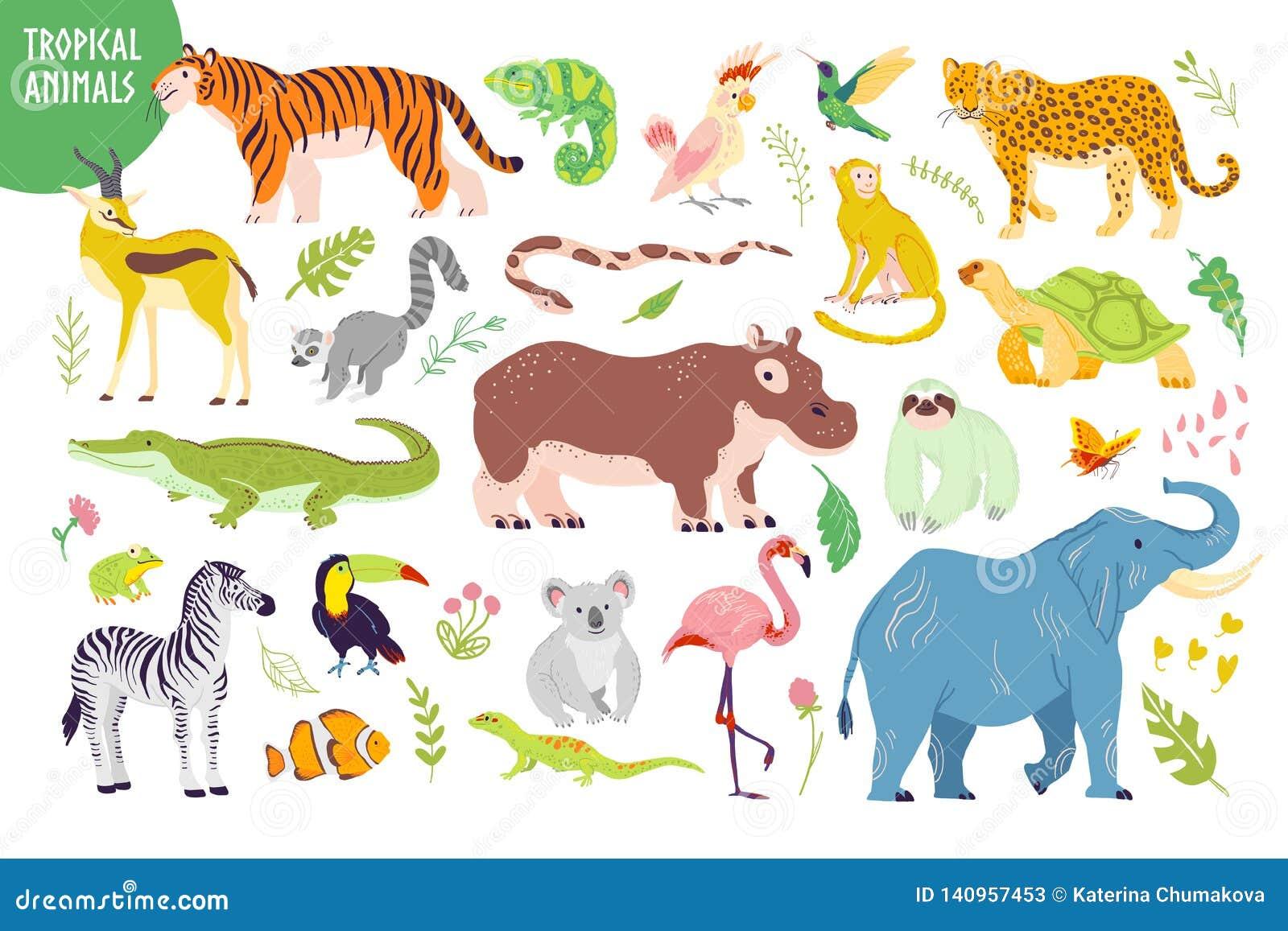 Vektorn ställde in av utdragna tropiska djur för den plana handen, fåglar, reptilar, växter som isolerades på vit bakgrund: tiger