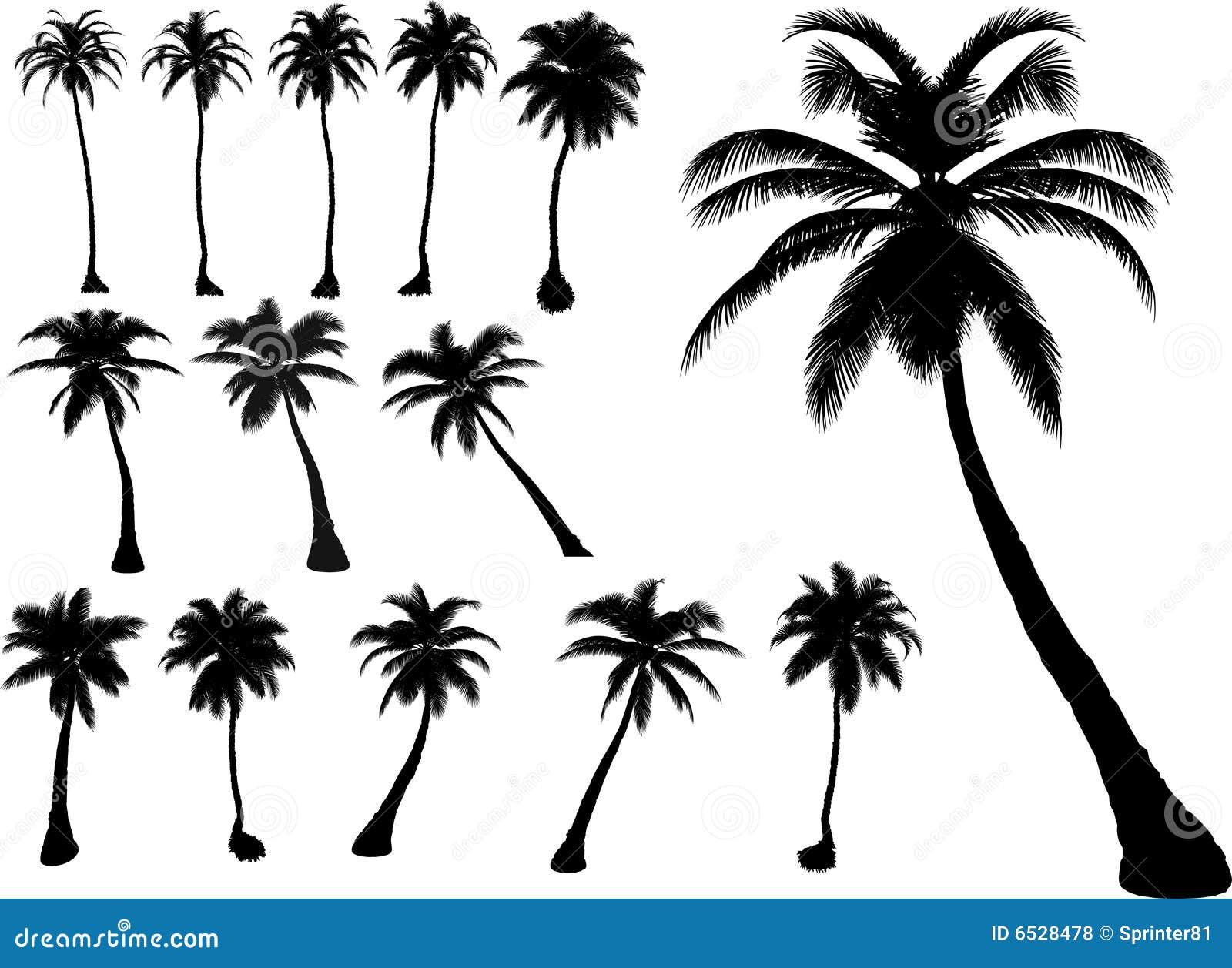 Vektorpalmen und -bäume