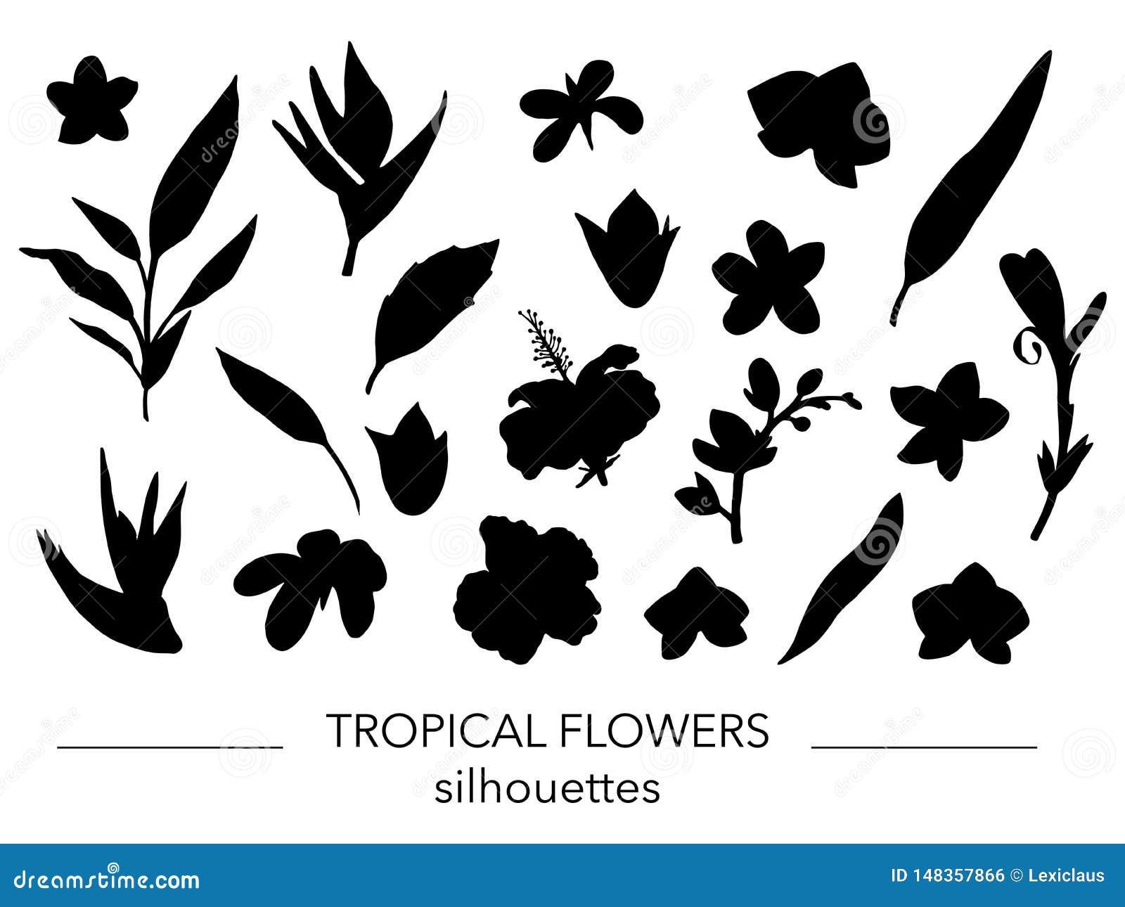 Vektorsatz tropische Blatt- und Blumenschattenbilder