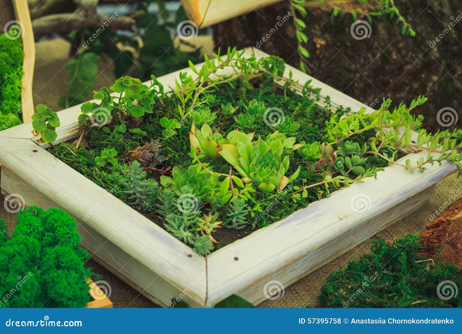 Vele kleine succulents