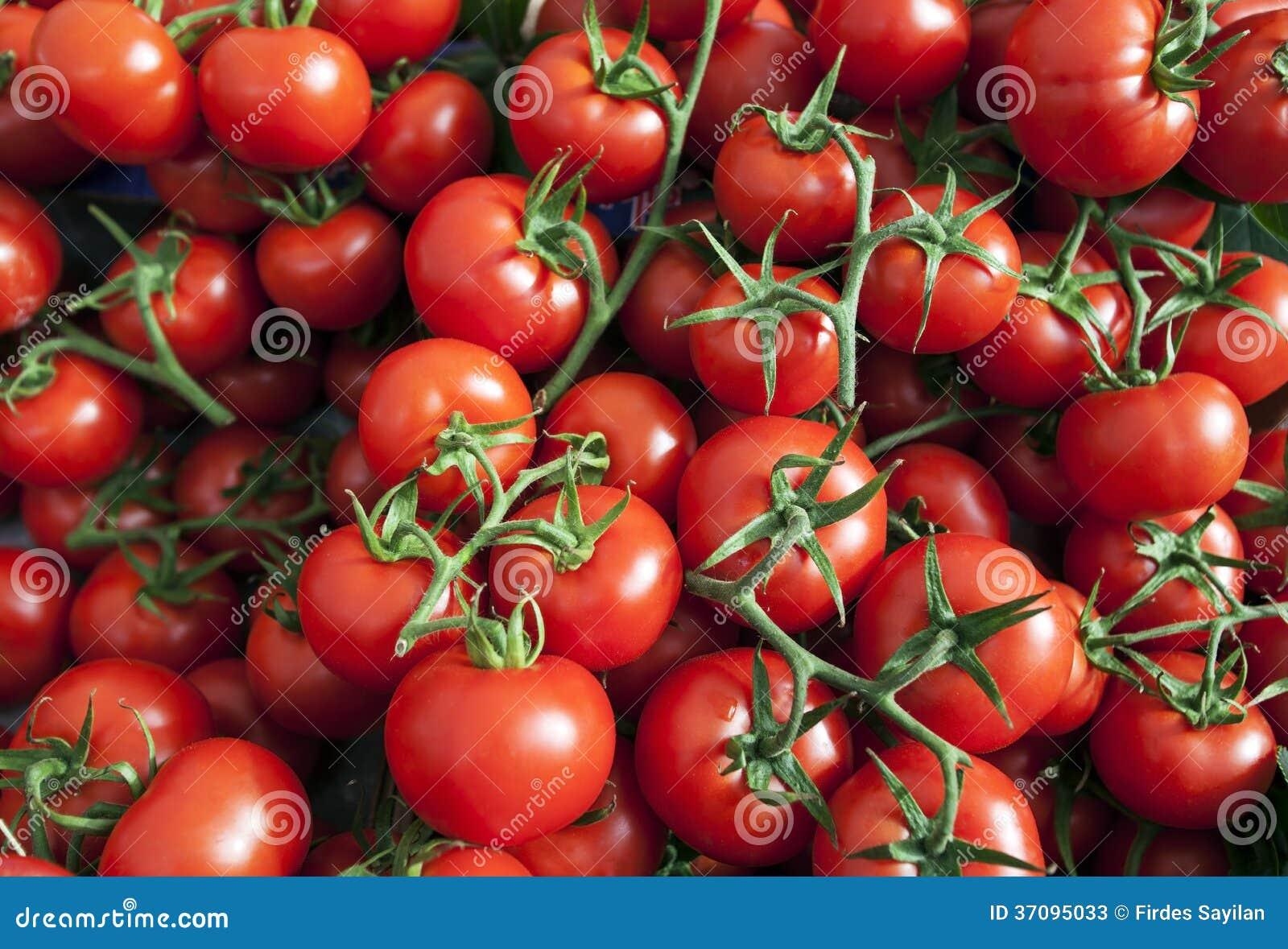 Vele Rijpe Rode Tomaten