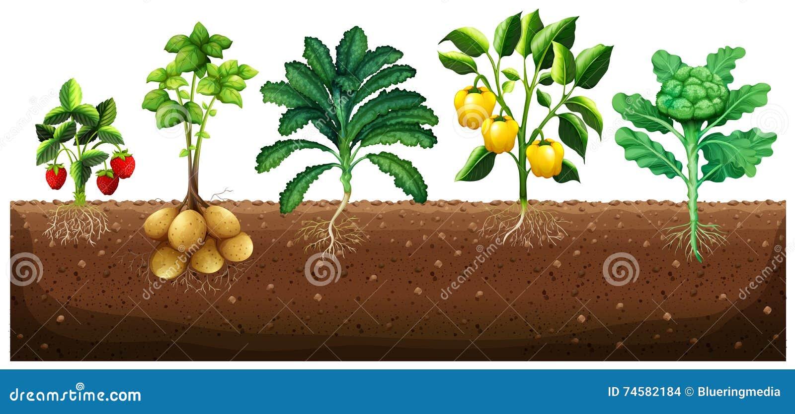 vele soorten groenten die op grond planten vector illustratie afbeelding 74582184. Black Bedroom Furniture Sets. Home Design Ideas