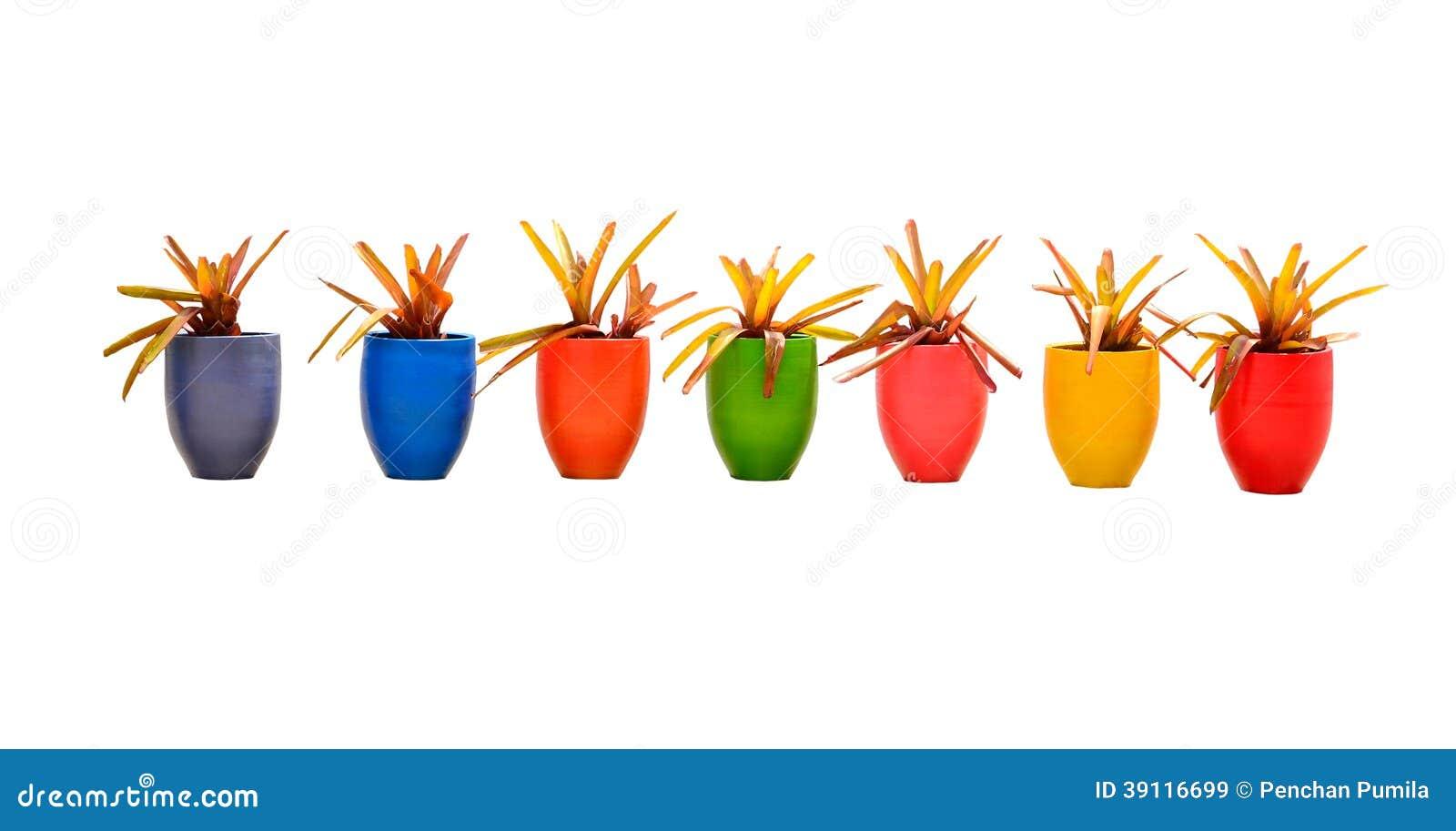Velen kleuren jardiniere
