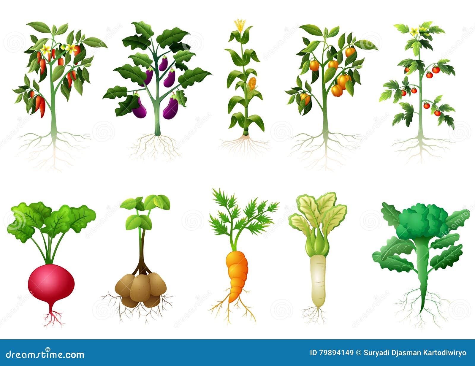 Velen vriendelijke installatie van groenten met wortelsillustratie