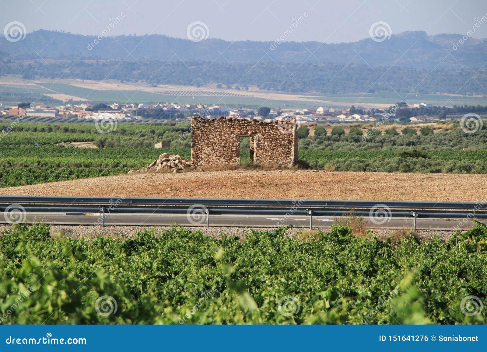 Velho arruinou a casa de pedra cercada por vinhedos