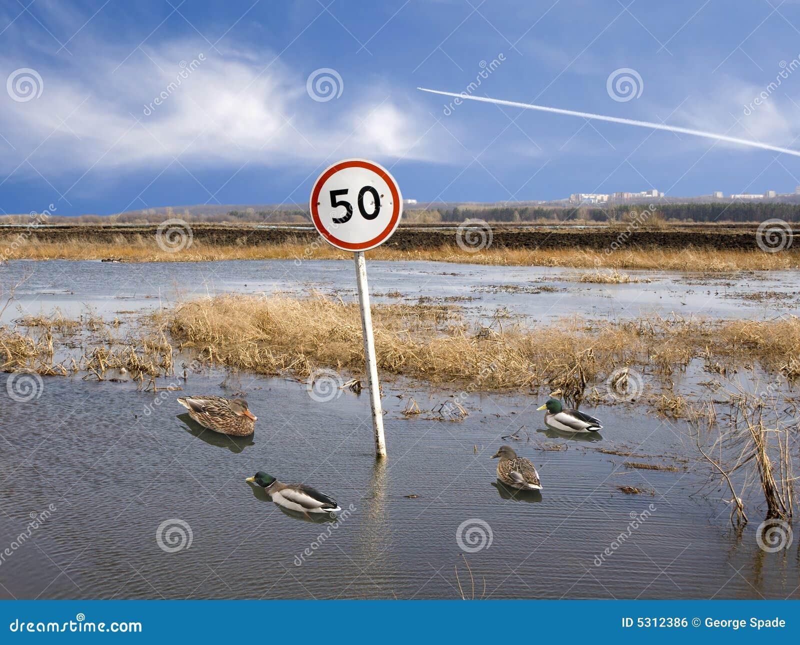 Download Velocità 50 4 fotografia stock. Immagine di mosca, anatra - 5312386