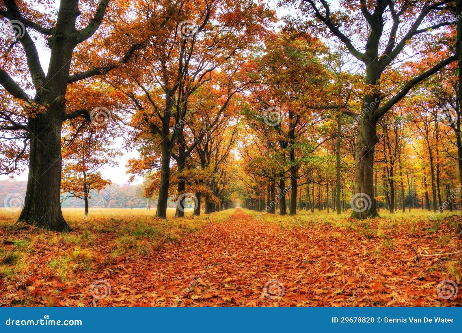 Veluwe in autunno