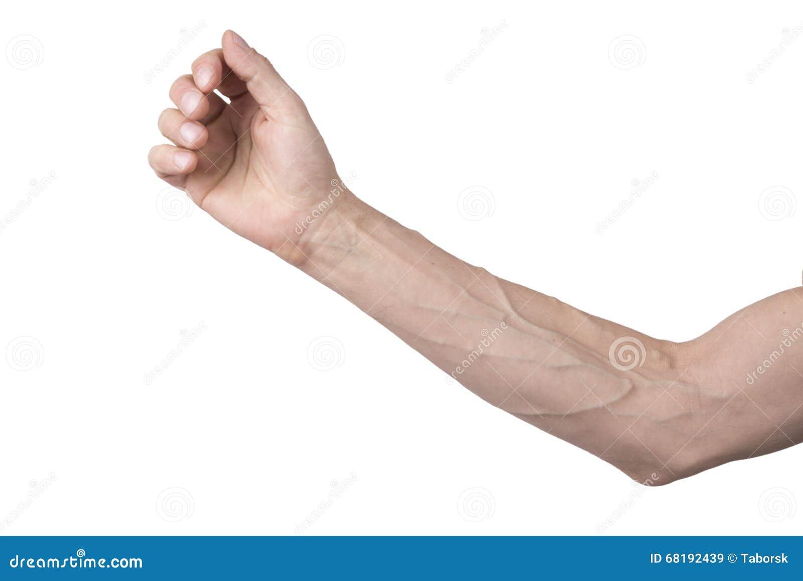 Venas en un brazo imagen de archivo. Imagen de muscular - 68192439