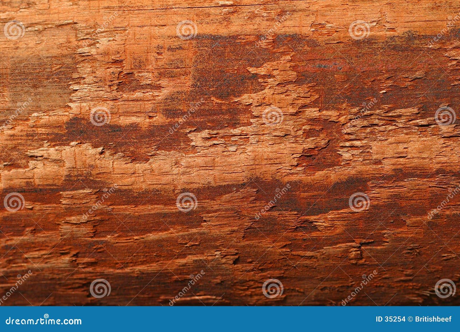 Venatura del legno