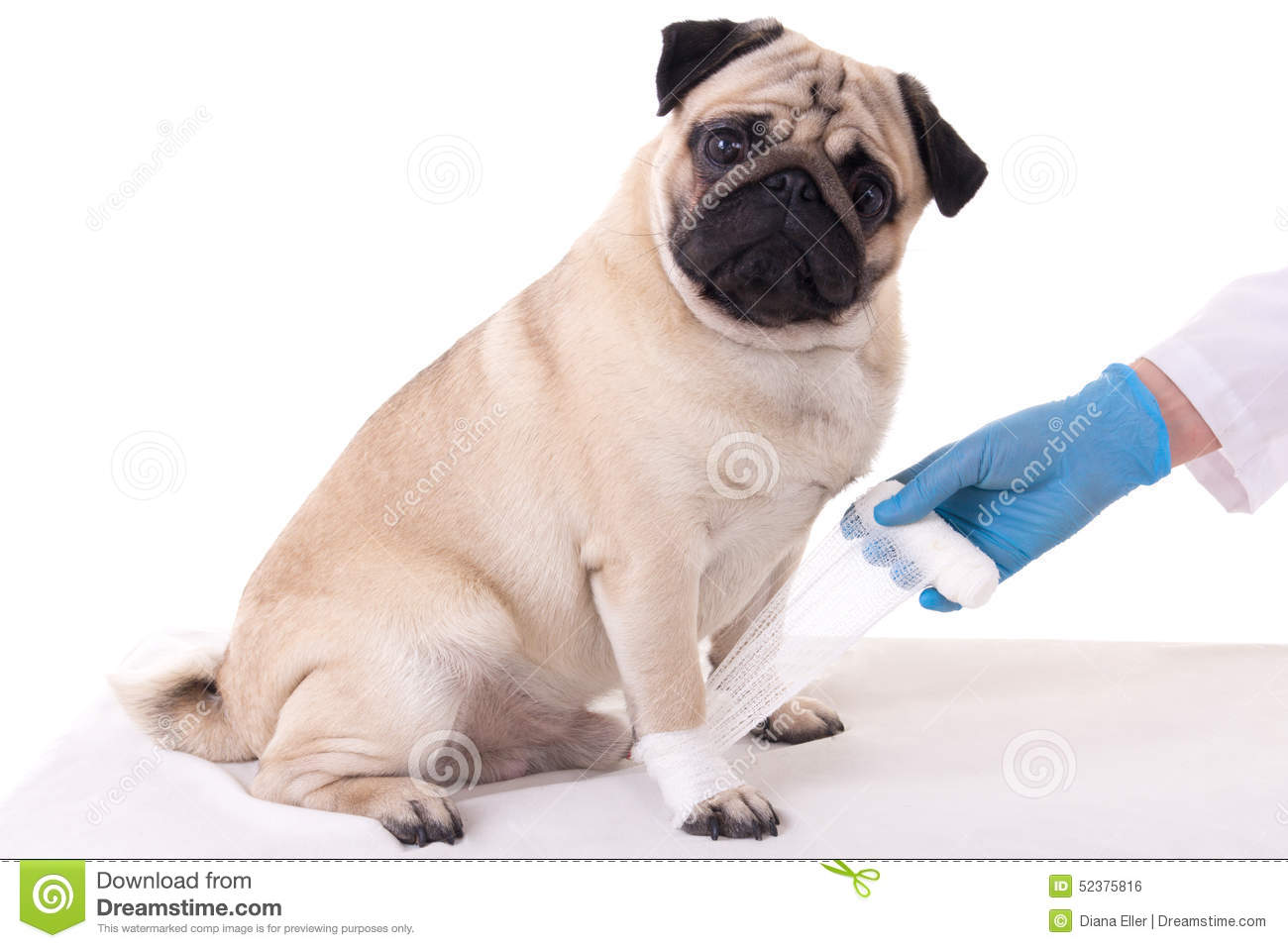 Picture Of A Dog Treated By A Veterinarian