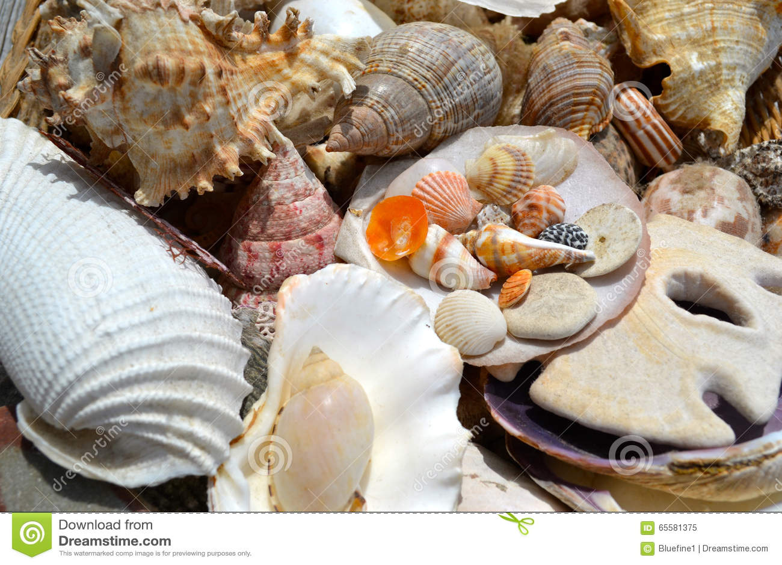 Vende conchas do mar