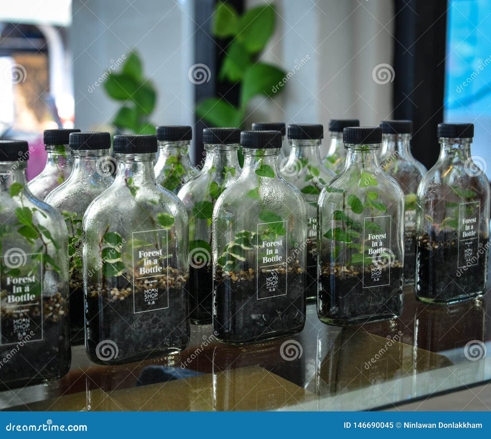 Vendendo plantas pequenas nas garrafas de vidro