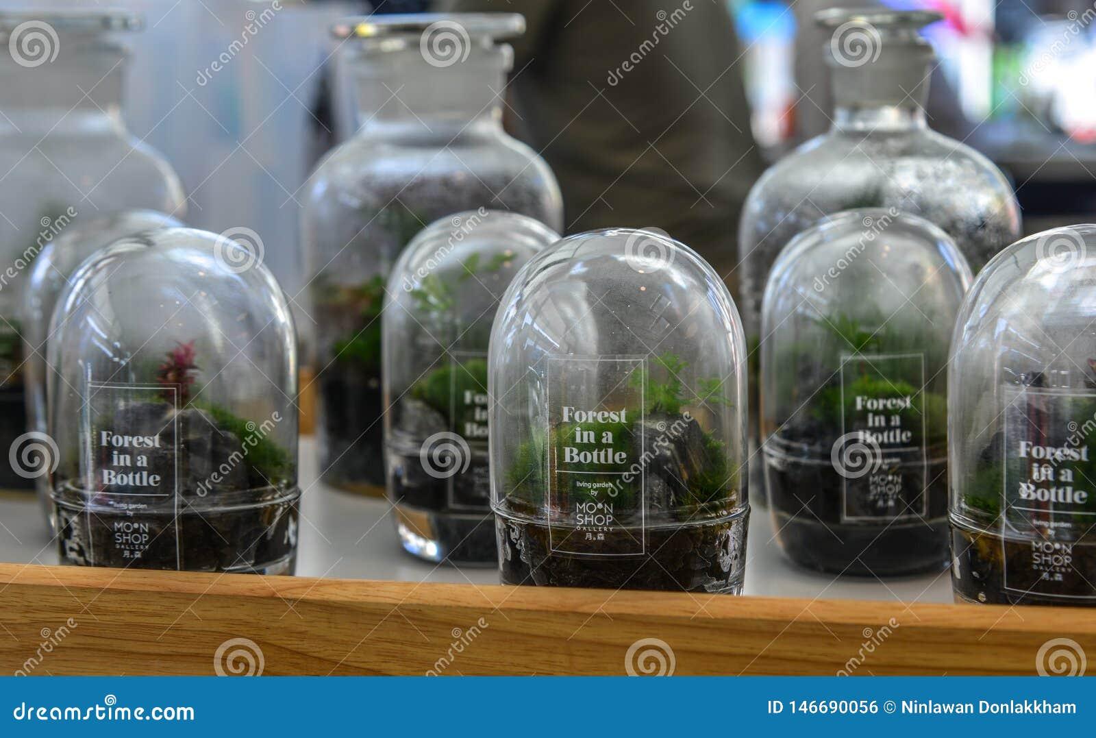 Vendita delle piante piccole in bottiglie di vetro