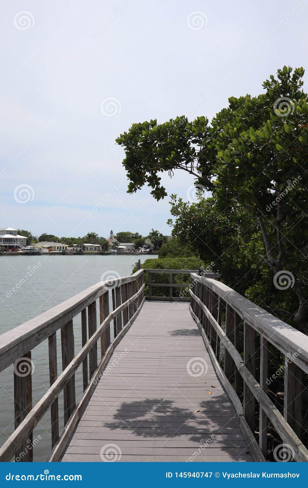 Ventaja del puente de madera a la selva Rastros de madera boardwalk Un muelle sobre el agua en las rocas indias vara la reserva n