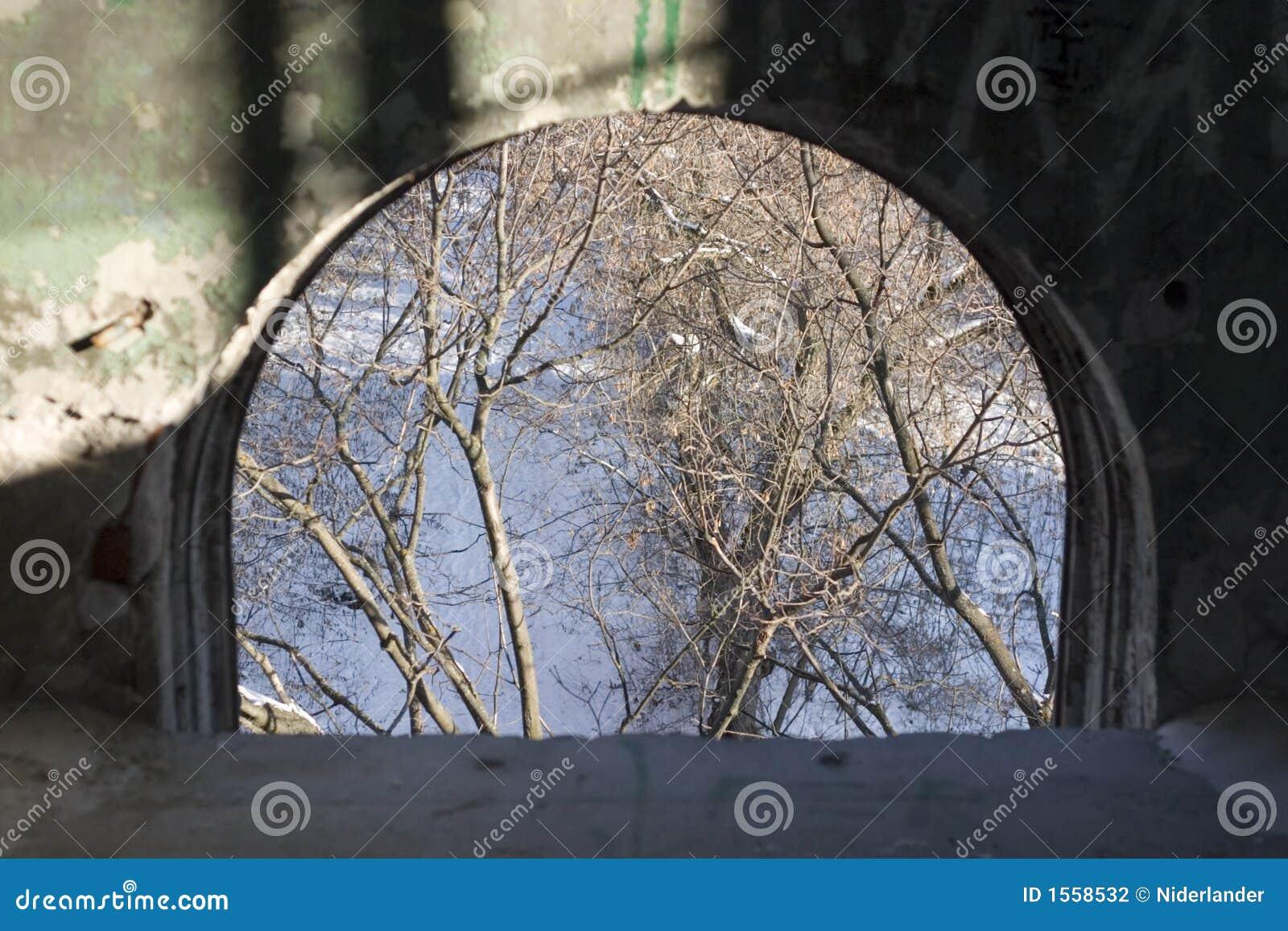 Ventana y árboles viejos