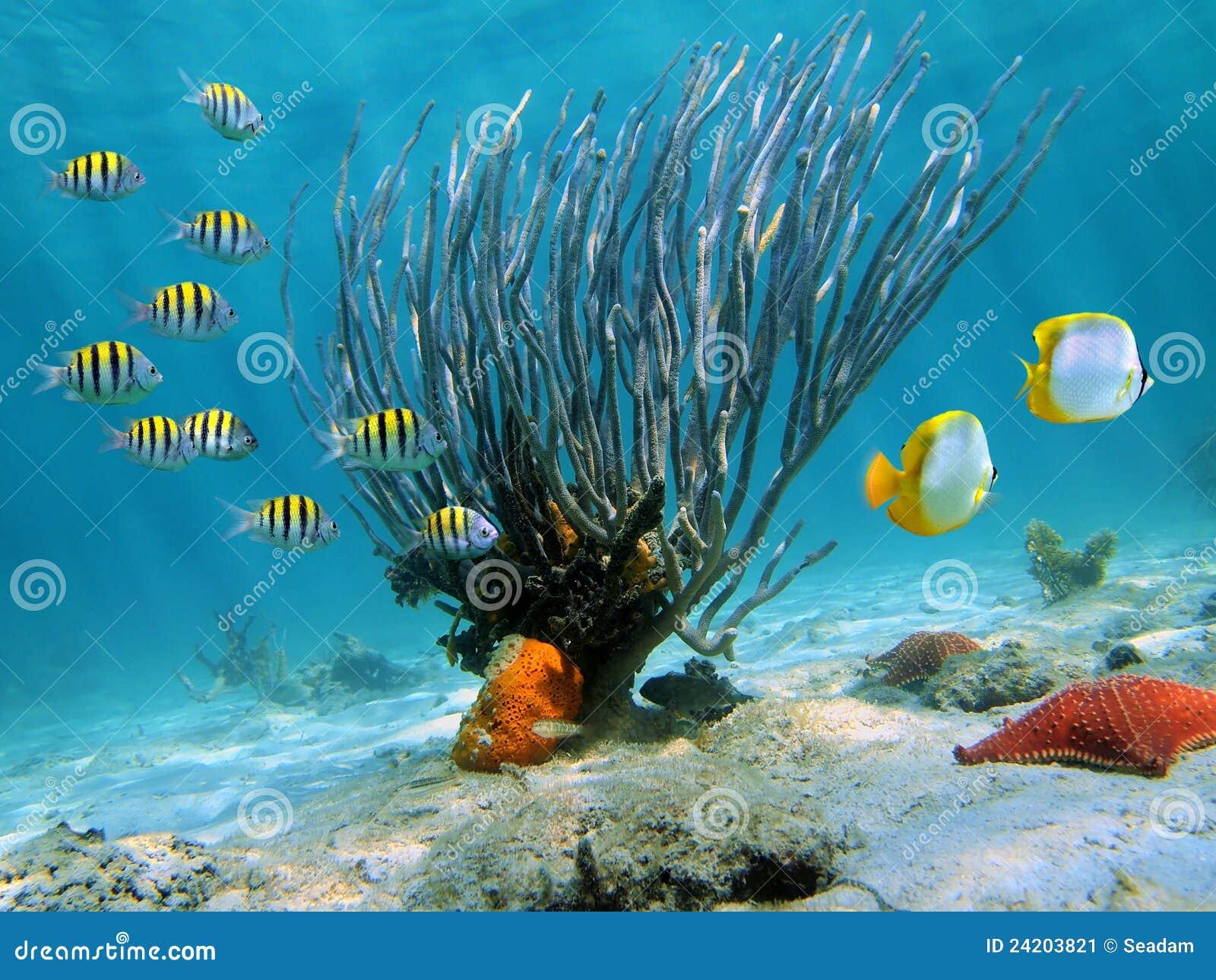 Ventilador de mar