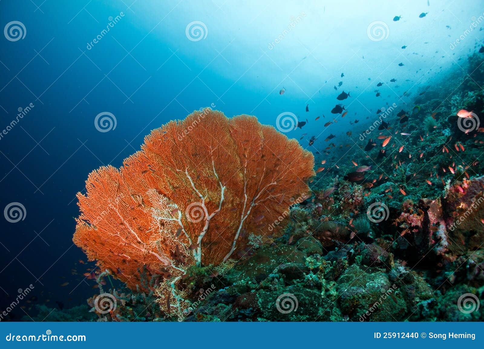 foto mar rojo:
