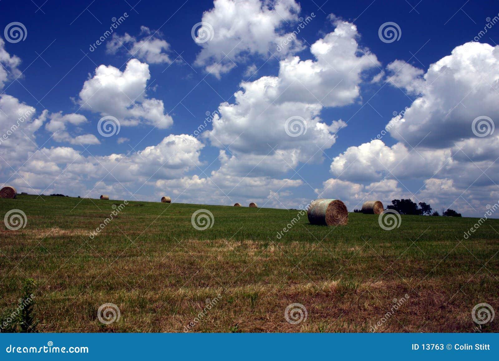 Verão na exploração agrícola