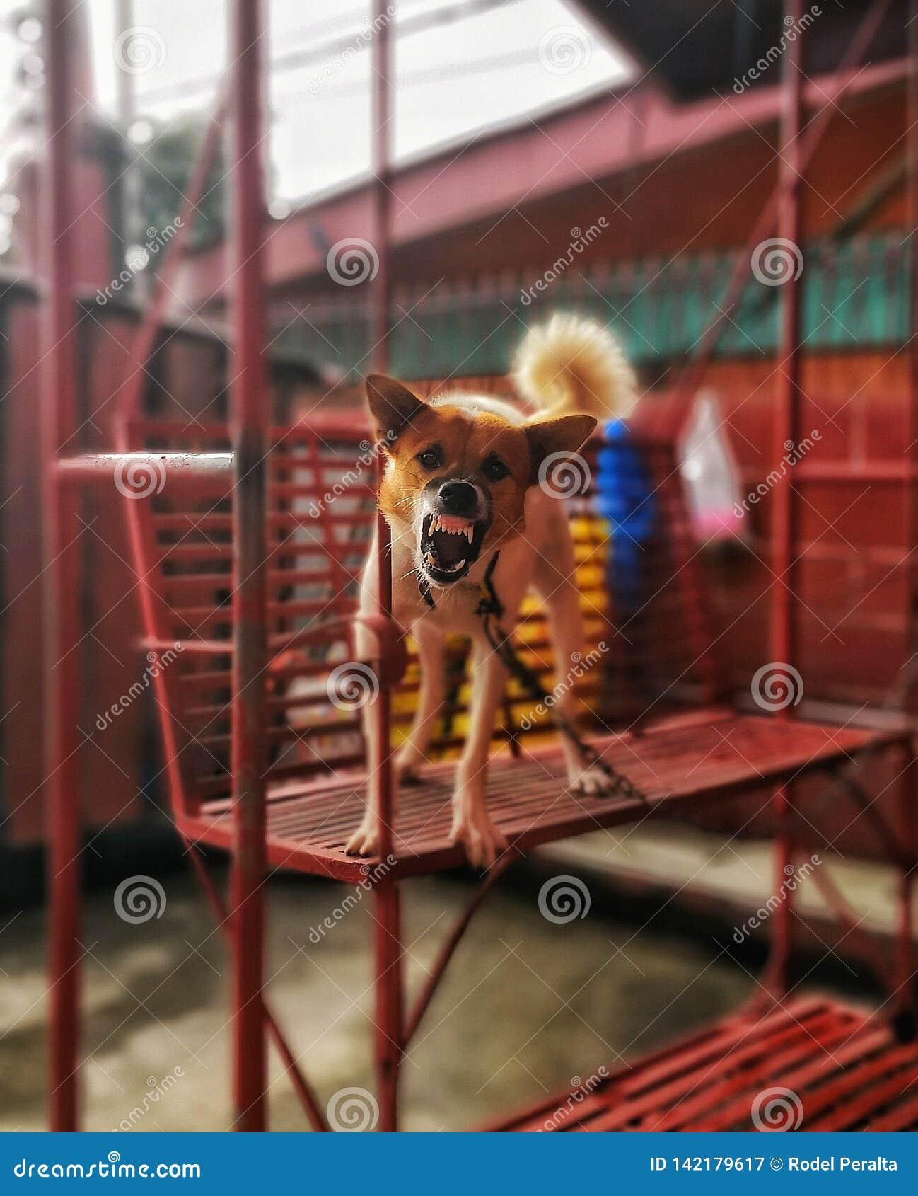 Verärgerter Hund