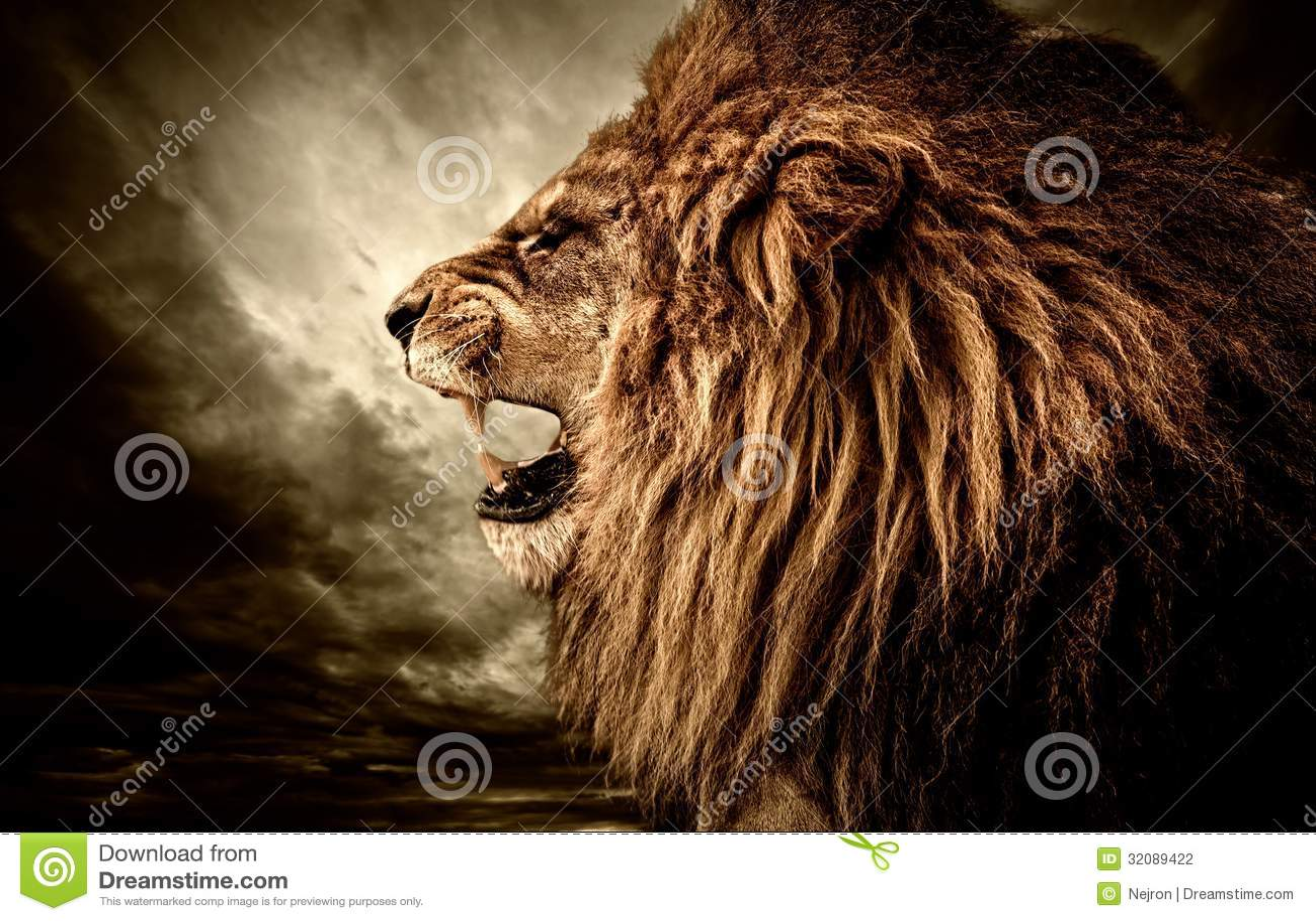 Verärgerter Löwe