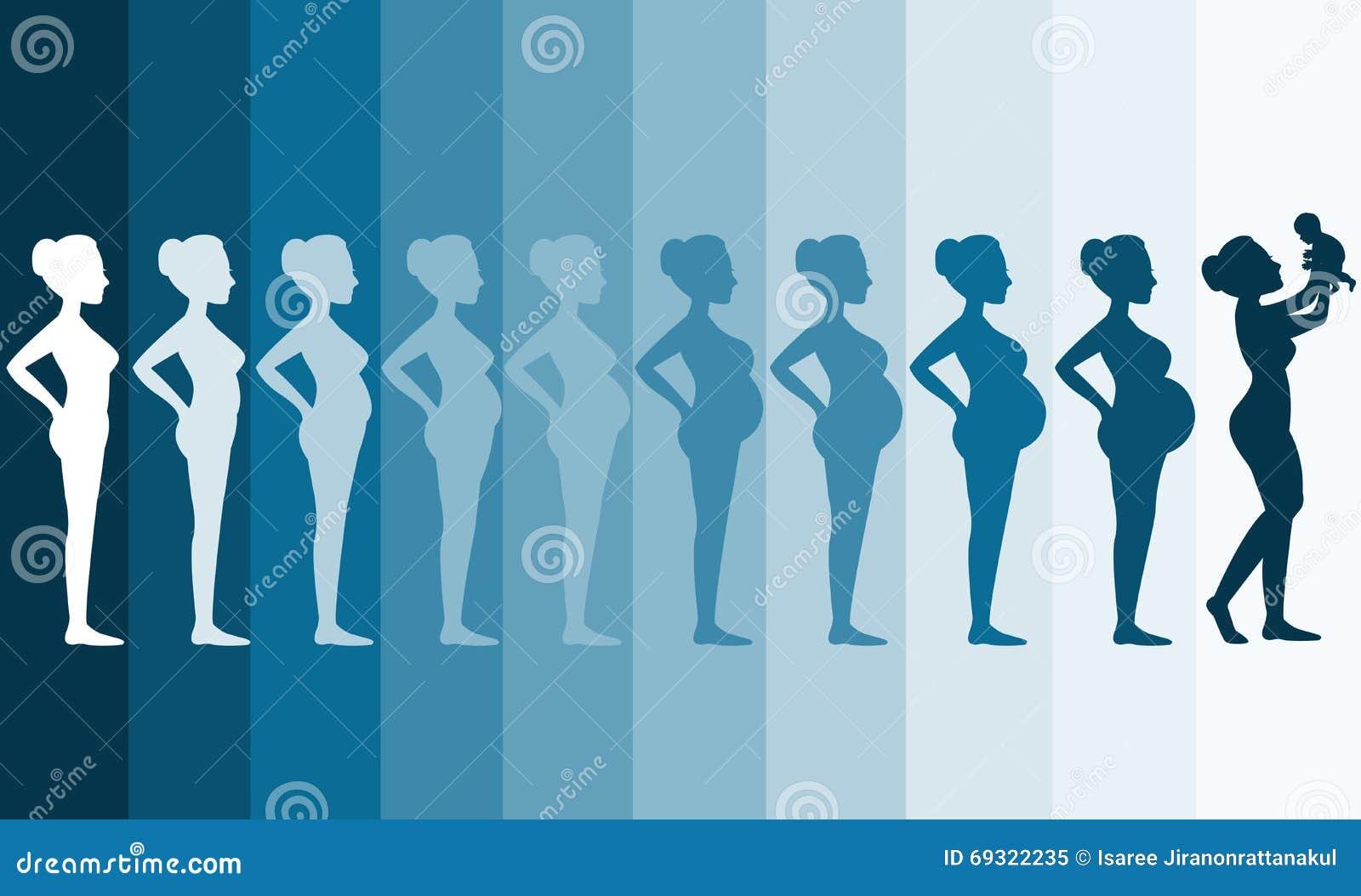 stadia bevalling