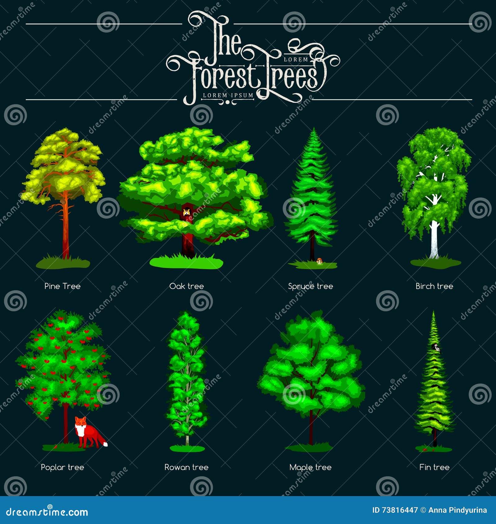 Verano Forest Tree verde en fondo oscuro Árboles determinados del vector de la historieta en parque al aire libre Árboles al aire