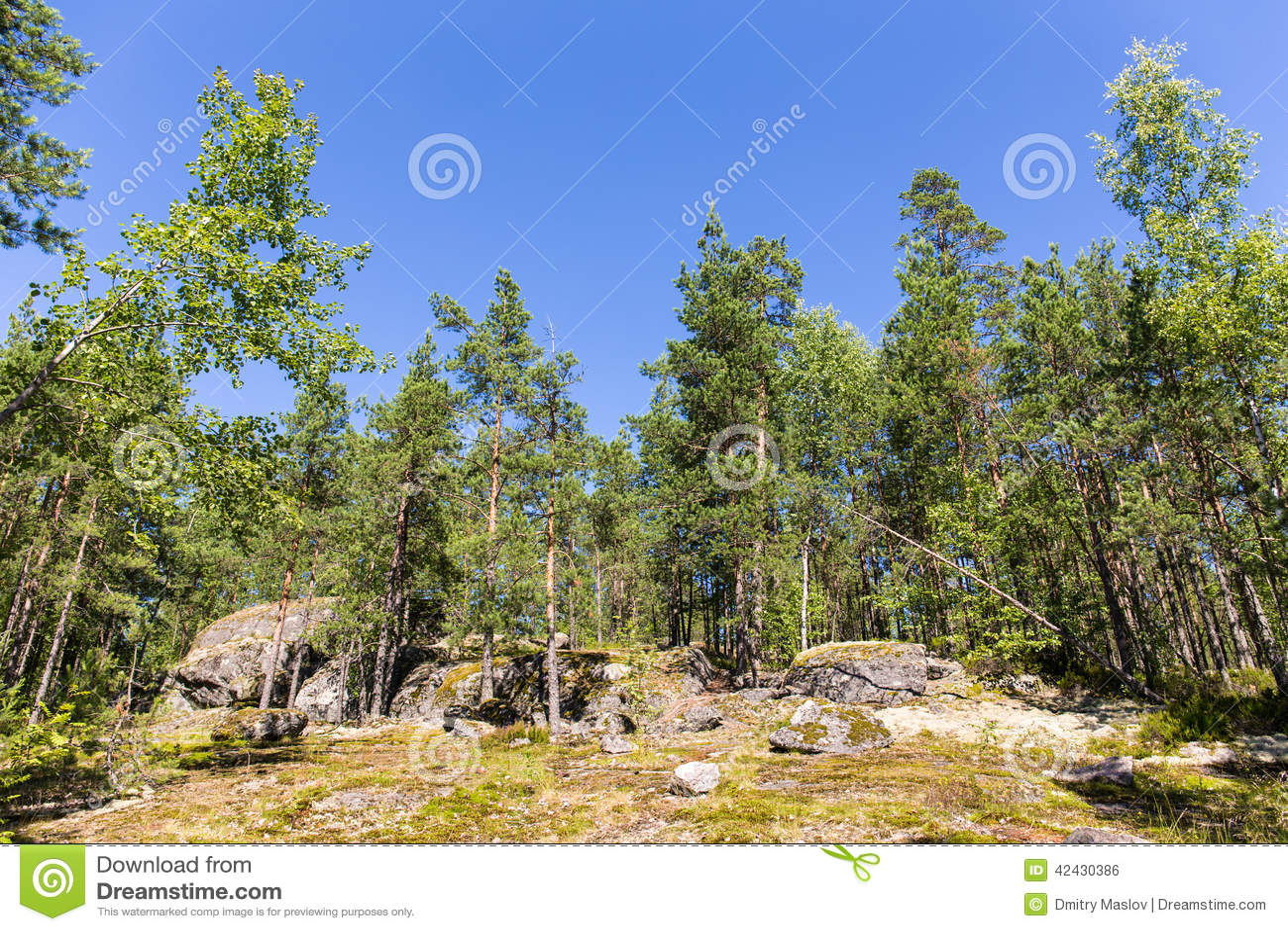 Verano Forrest