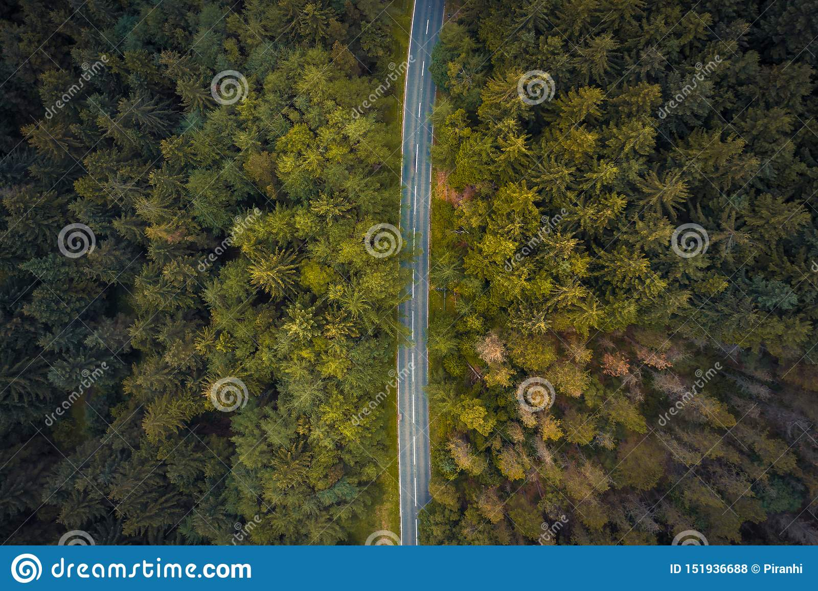 Verbazend luchtschot van de bomen langs de Slangpas in Piekdistricts Nationaal Park, schot in de zomer van 2019