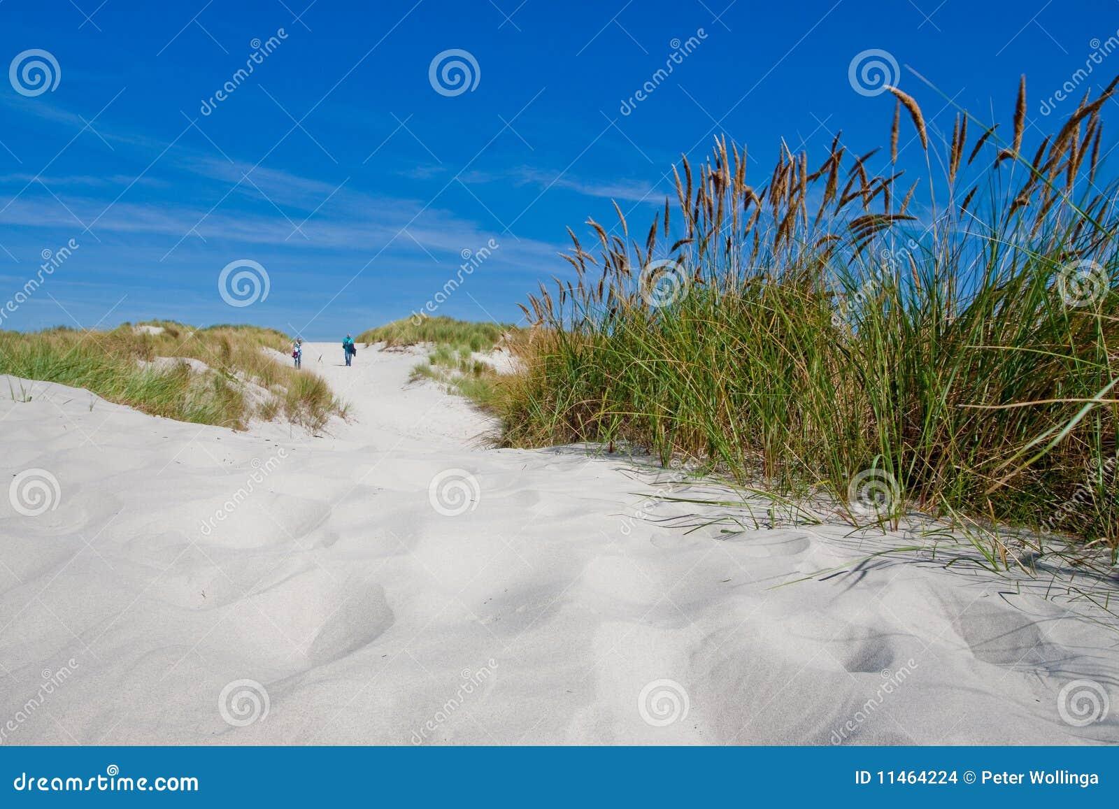 Verbinden Sie das Gehen in die Sanddünen mit Strandhafer